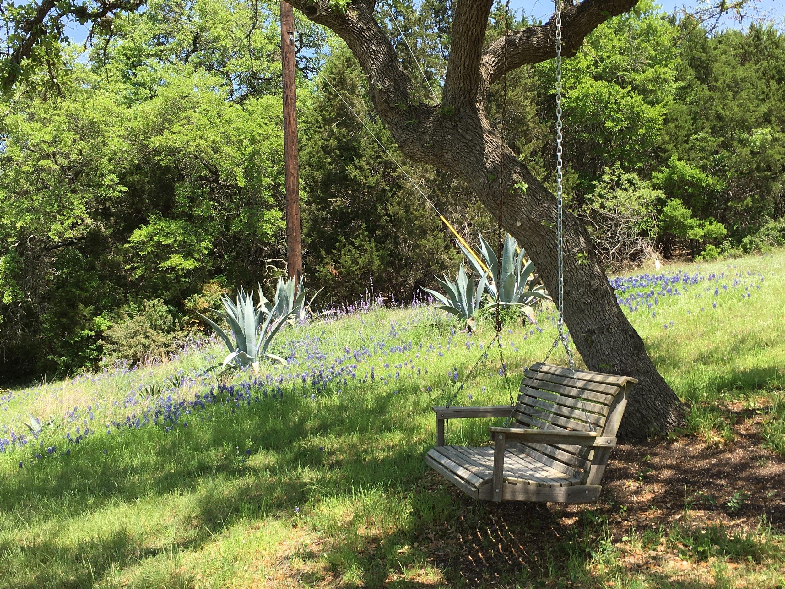 Bluebonnet Swing.jpg