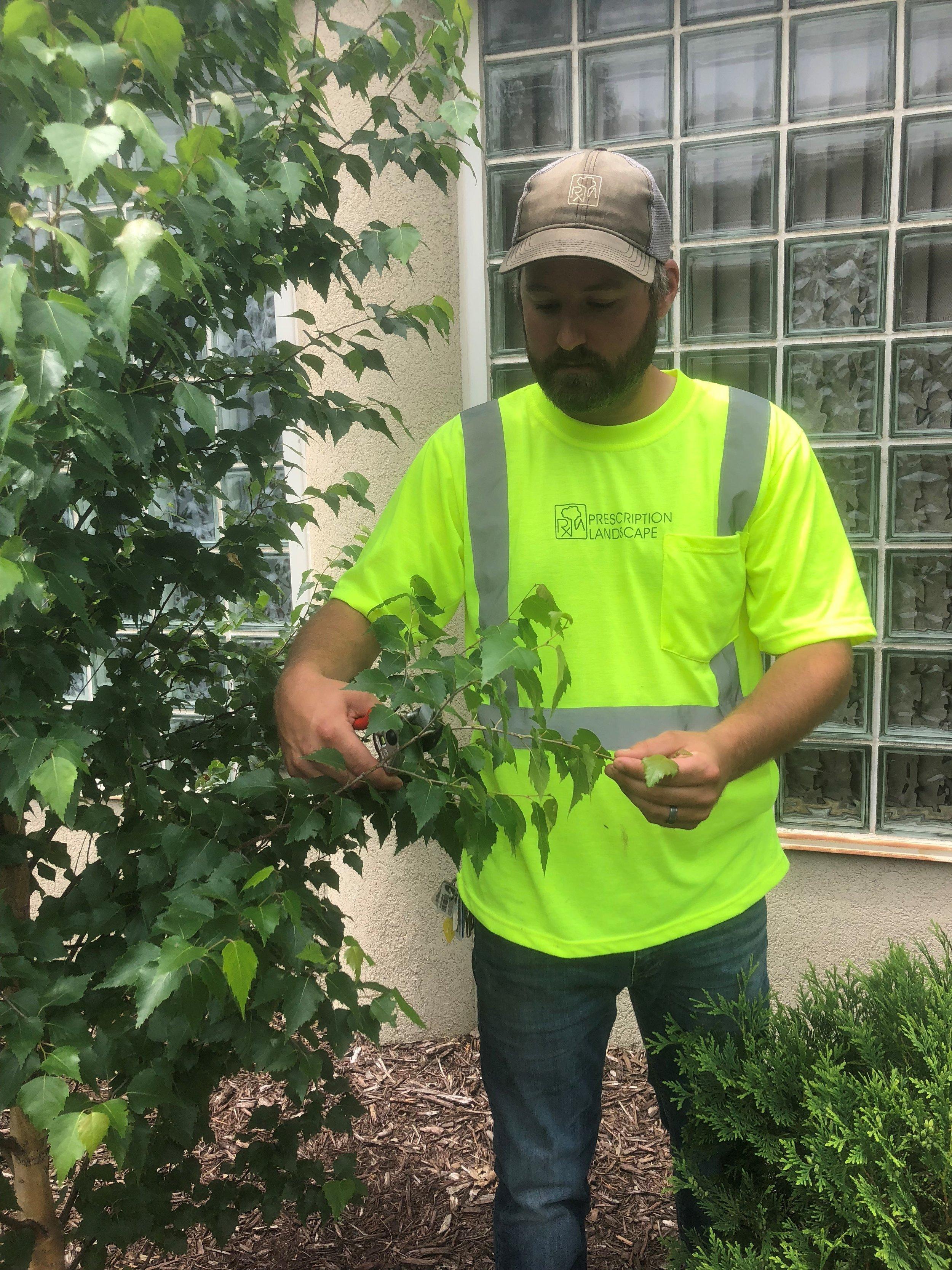 Harris Pruning 1.jpg