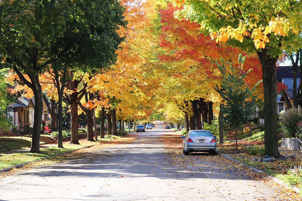 Mississippi Watershed-mpls-fall-trees.jpg