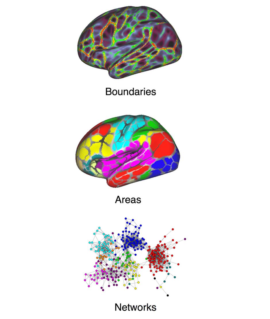 Building brain network models.