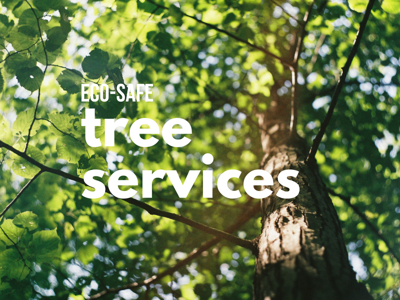 cape-cod-tree-services-and-brush-removal.png