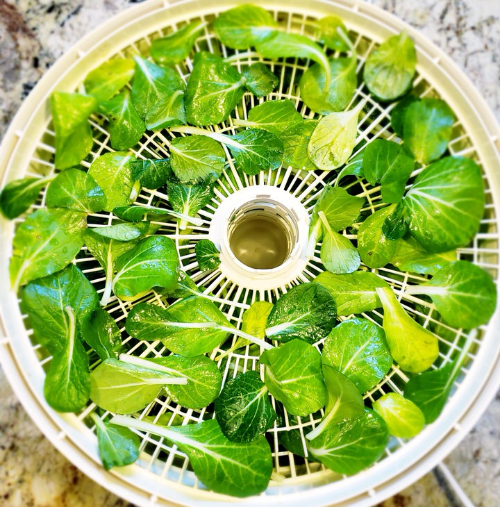 Baby choy in the food dehydrator.