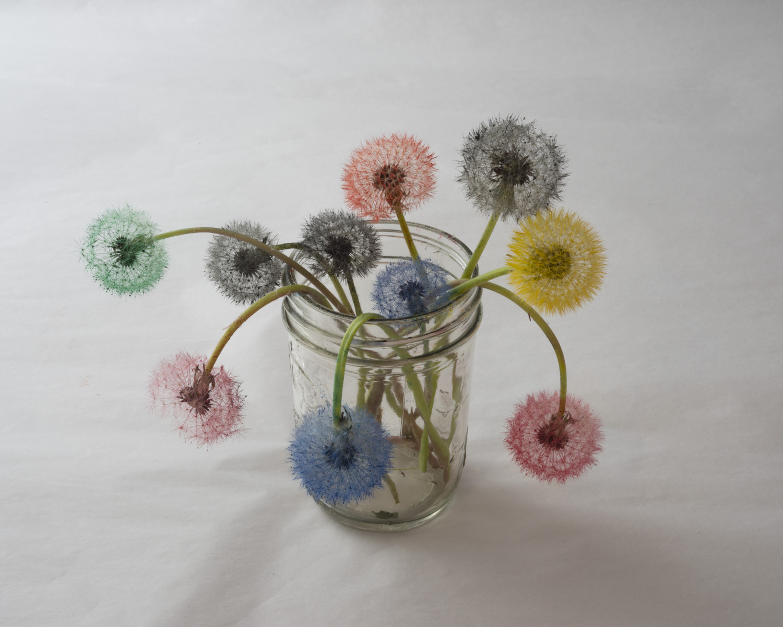 Epson inkset, dandelions