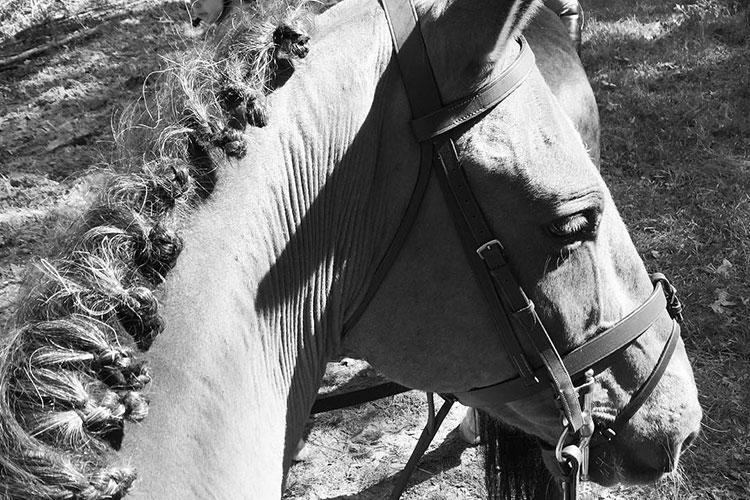 Meet Rio, Haig Point's 13-year old Marsh Tacky horse