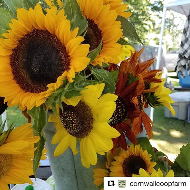 🌻 #repost @cornwallcoopfarm with @get_repost ・・・ This year has produced the best sunflowers! #sunflower #cornwallcoopfarmarket • #sunflower #farm #natural #farmersmarket #autumn #summer #season #color #yellow #nwct #litchfieldhills #bright #sunny #considercornwall
