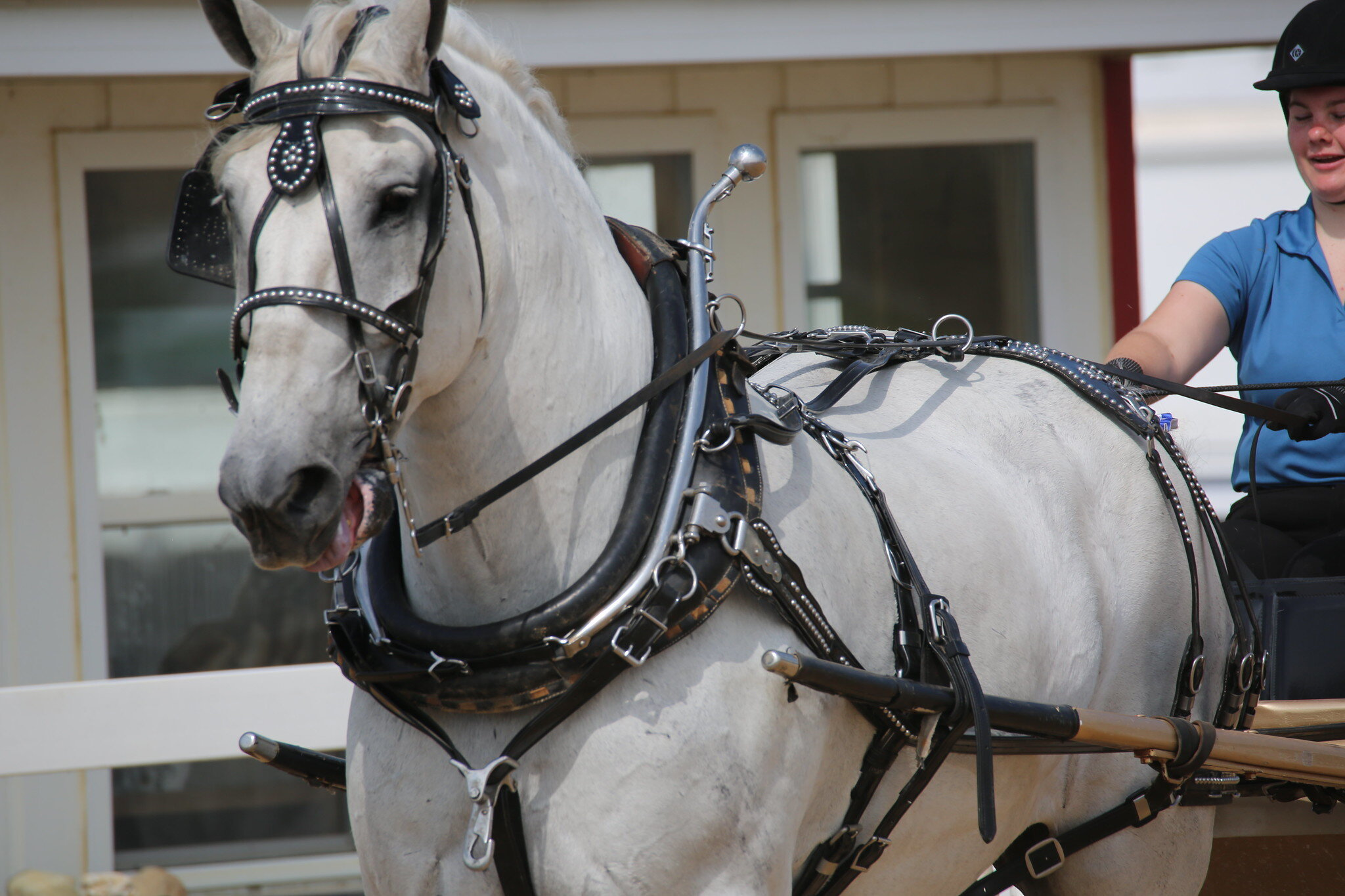 Draft Horse Show Porter County Fair
