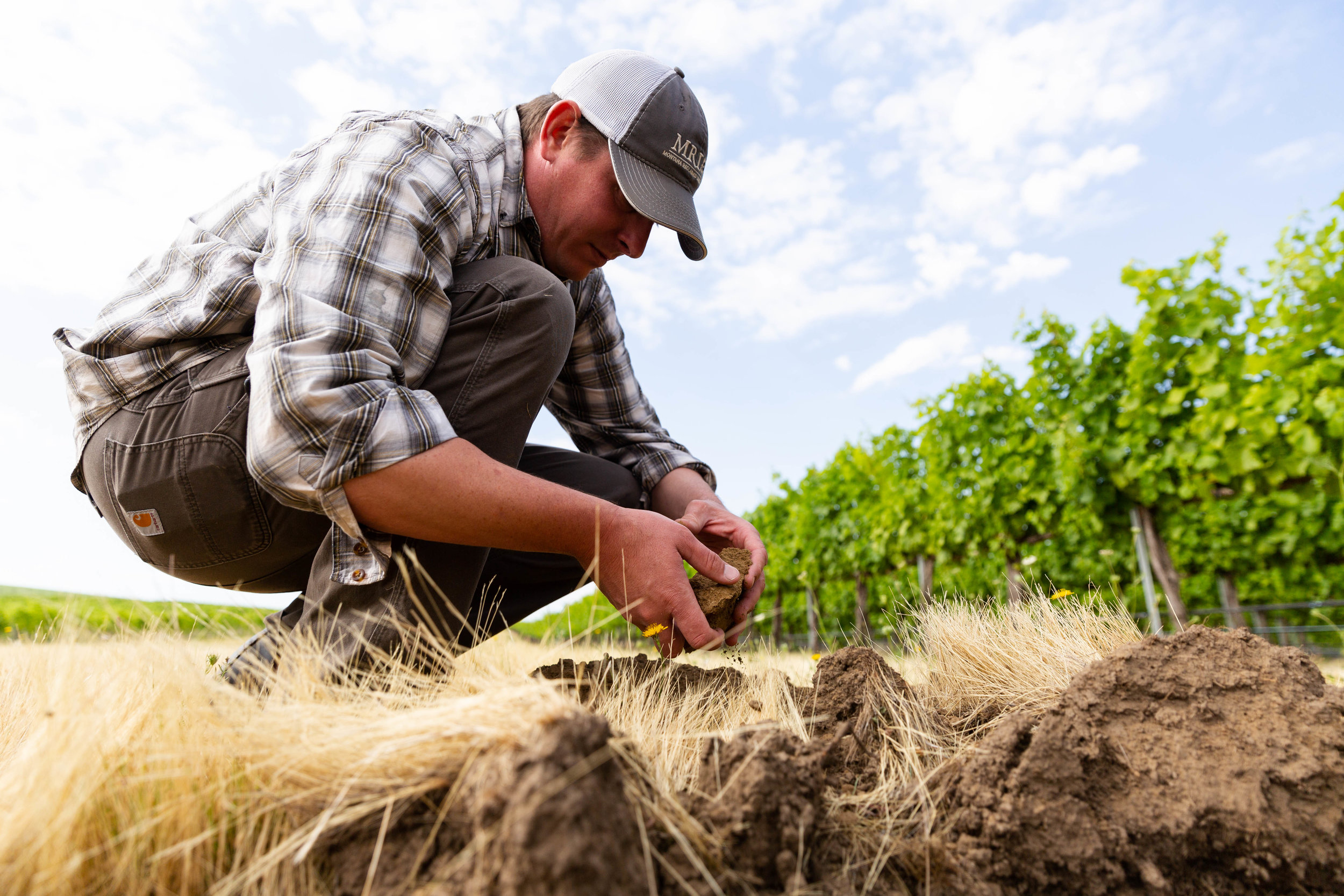 Pictured above: Brad Sorensen, Vineyard Manager/Viticulturist