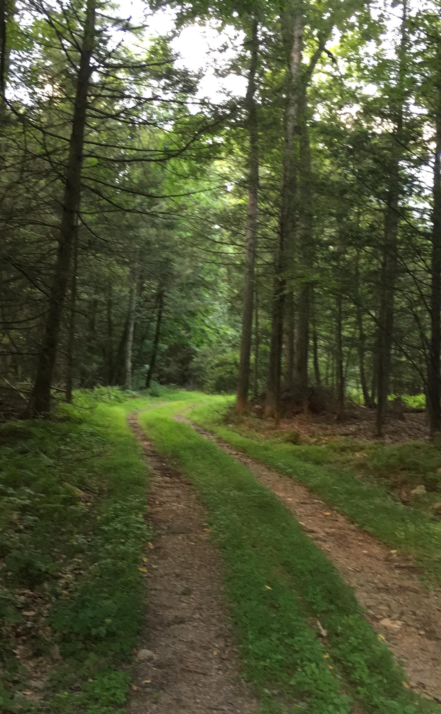 Cabin Lane.jpg