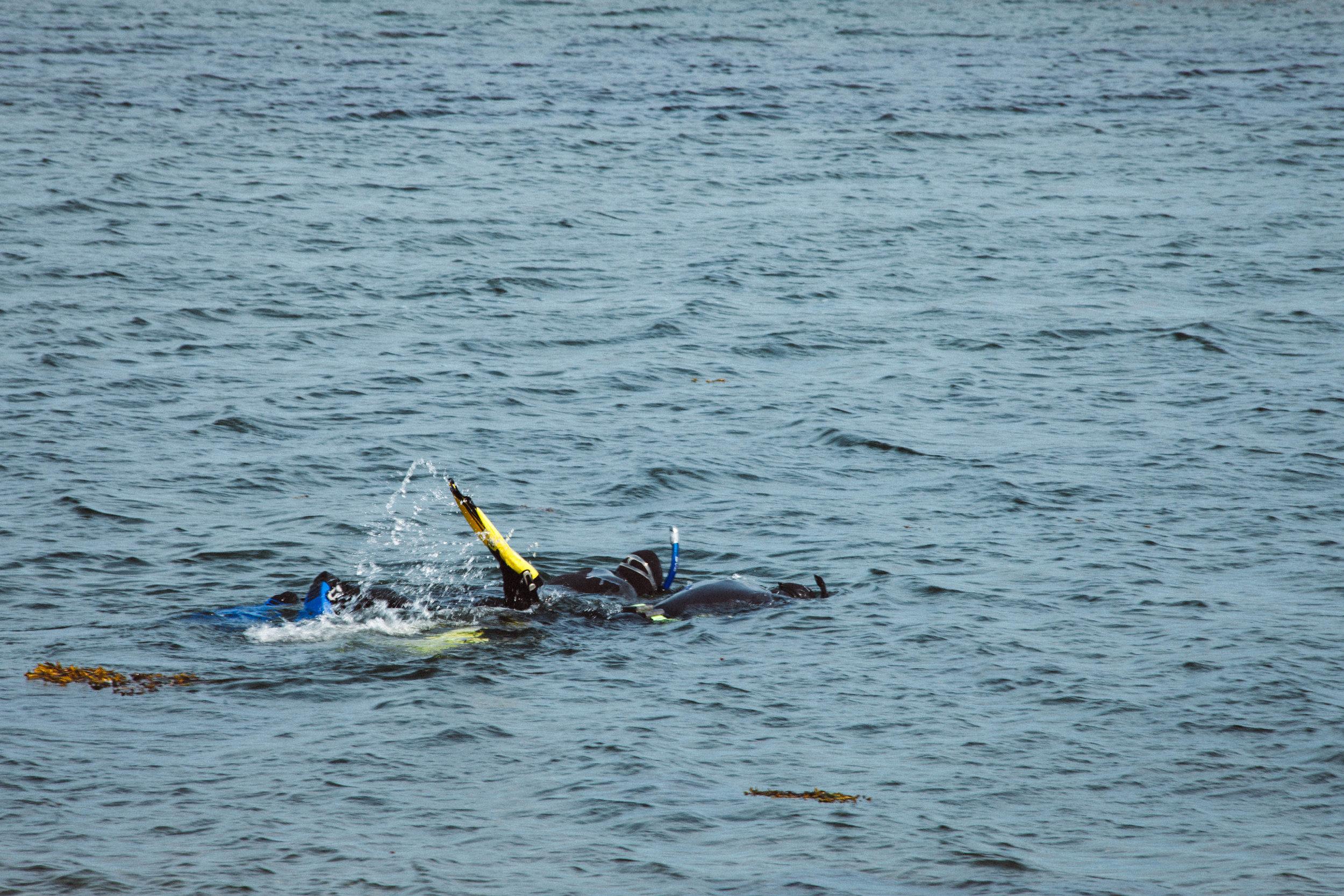 Plongée - Les Ilets est également un site très réputé pour la plongé sous marine ou en apnée. On peut y observer une large biodiversité marine. Les Ilets bloquent les vagues provenant du large et permet une plongé moins mouvementé pour permette à tous les niveaux d'expérience d'y participer.