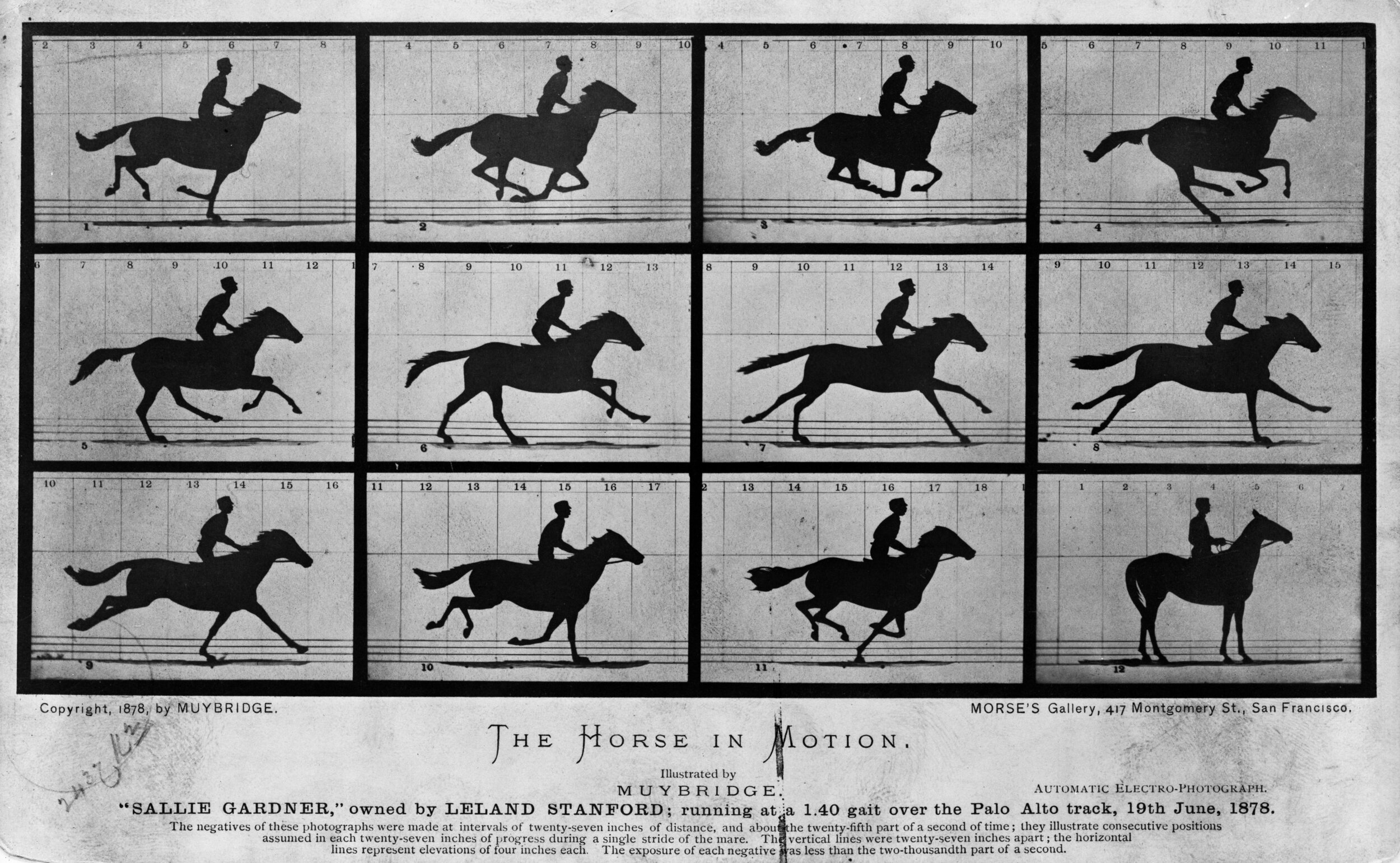 The Horse in Motion , 1878 by  Eadweard Muybridge