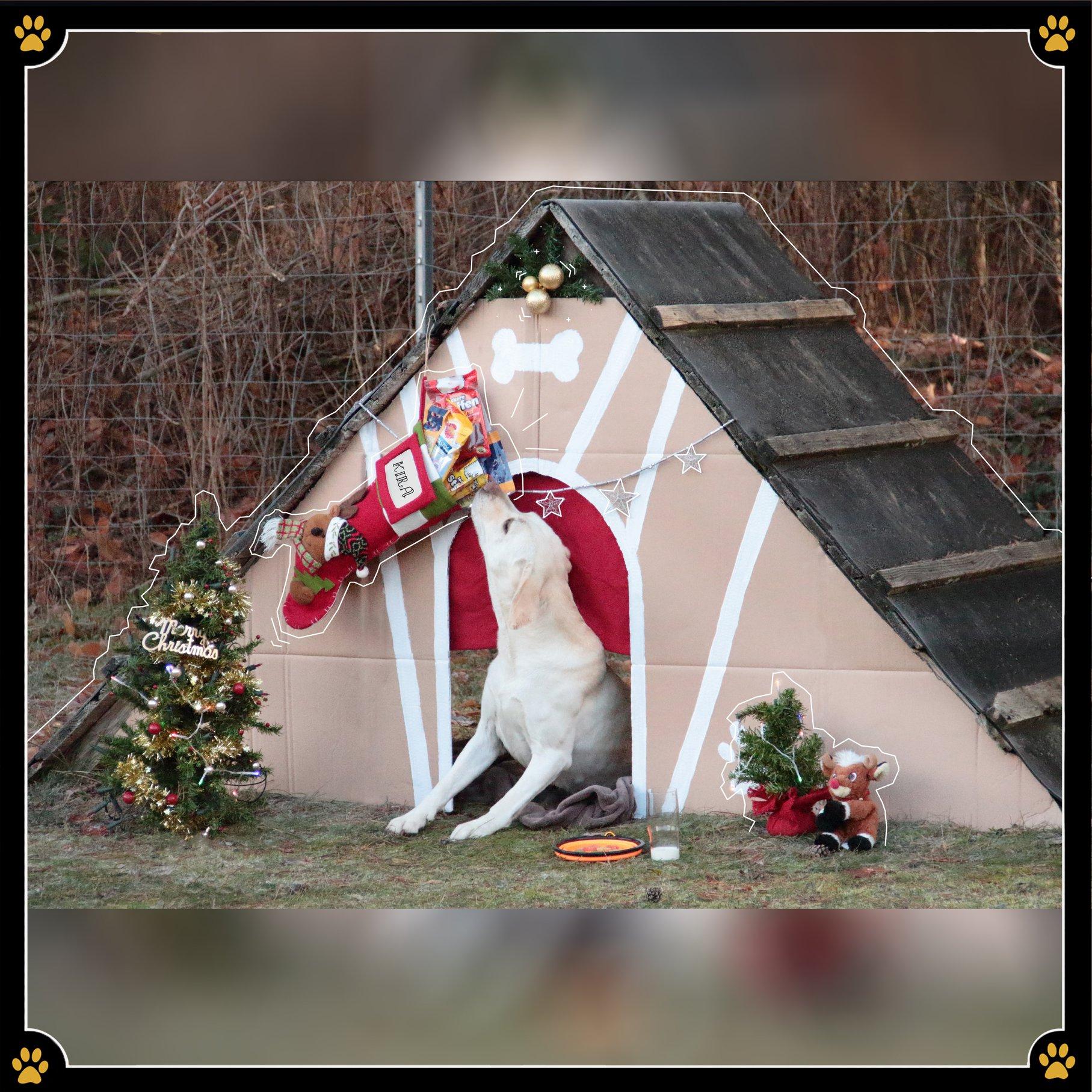 6. D E Z E M B E R...er war da!🎅🏻JoBaDog wünscht allen Hundehaltern einen wunderschönen Nikolaus! 💛 -