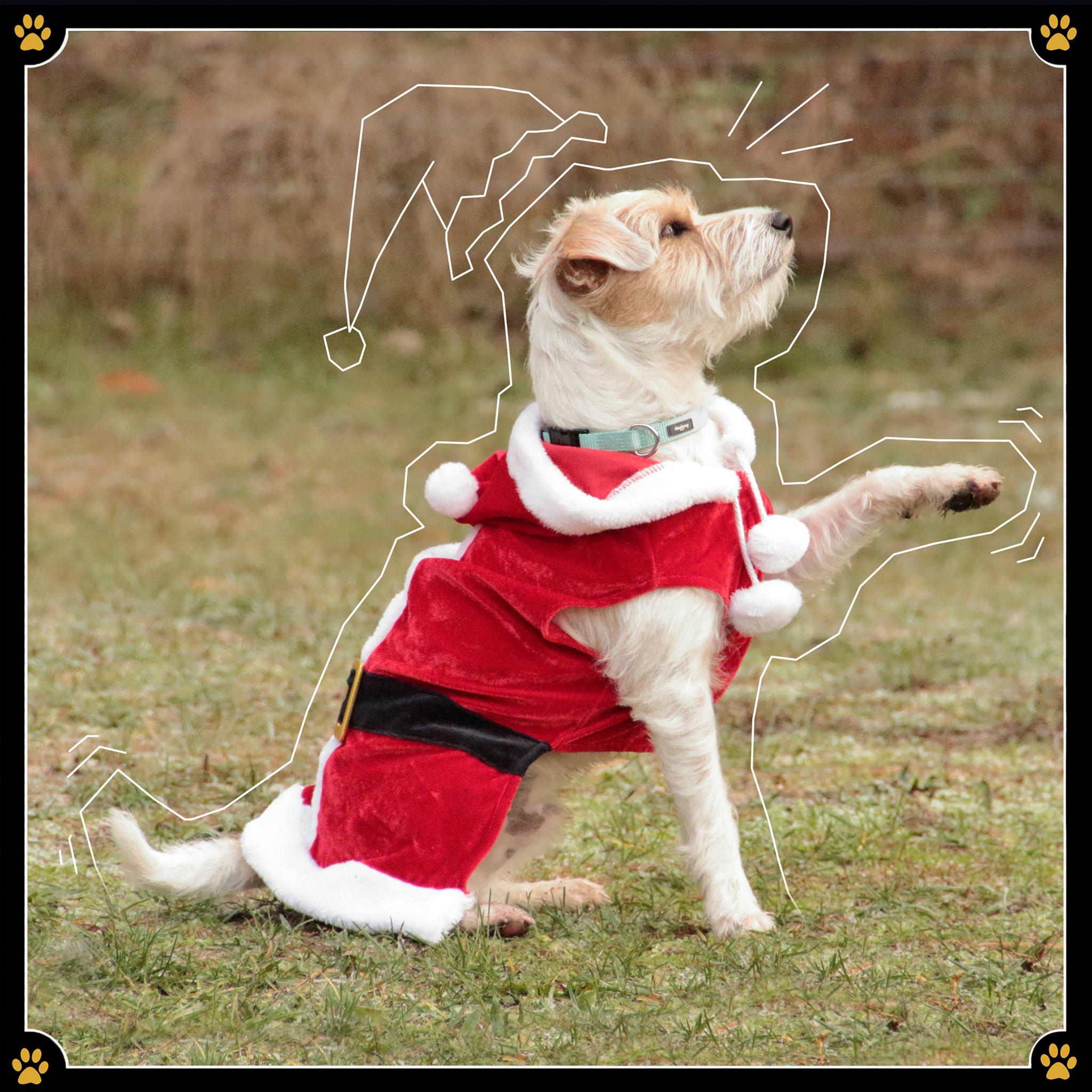 17. Dezember - Dass Kostüme nicht besonders gut für Hunde sind wurde in den letzten zwei Beiträgen zu dem Thema wohl sehr deutlich. 🐶Jedoch hat das Anprobieren von Hundekostümen auch positive Seiten, denn es bietet ein tolles Alternativ-Training für den Ernstfall.💉Wenn der Hund beispielsweise operiert werden und danach einen Kragen oder einen Body tragen muss bietet das Training mit einem Kostüm im Voraus viele Vorteile. So kann man den Vierbeiner daran gewöhnen und erspart sich nach der Operation, die sowieso schon genug Stress mit sich bringt, weiteren Stress.💛Trotzdem sollten auch beim Training das Wohlgefühl des Hundes und der Lernspaß im Vordergrund stehen.🐾