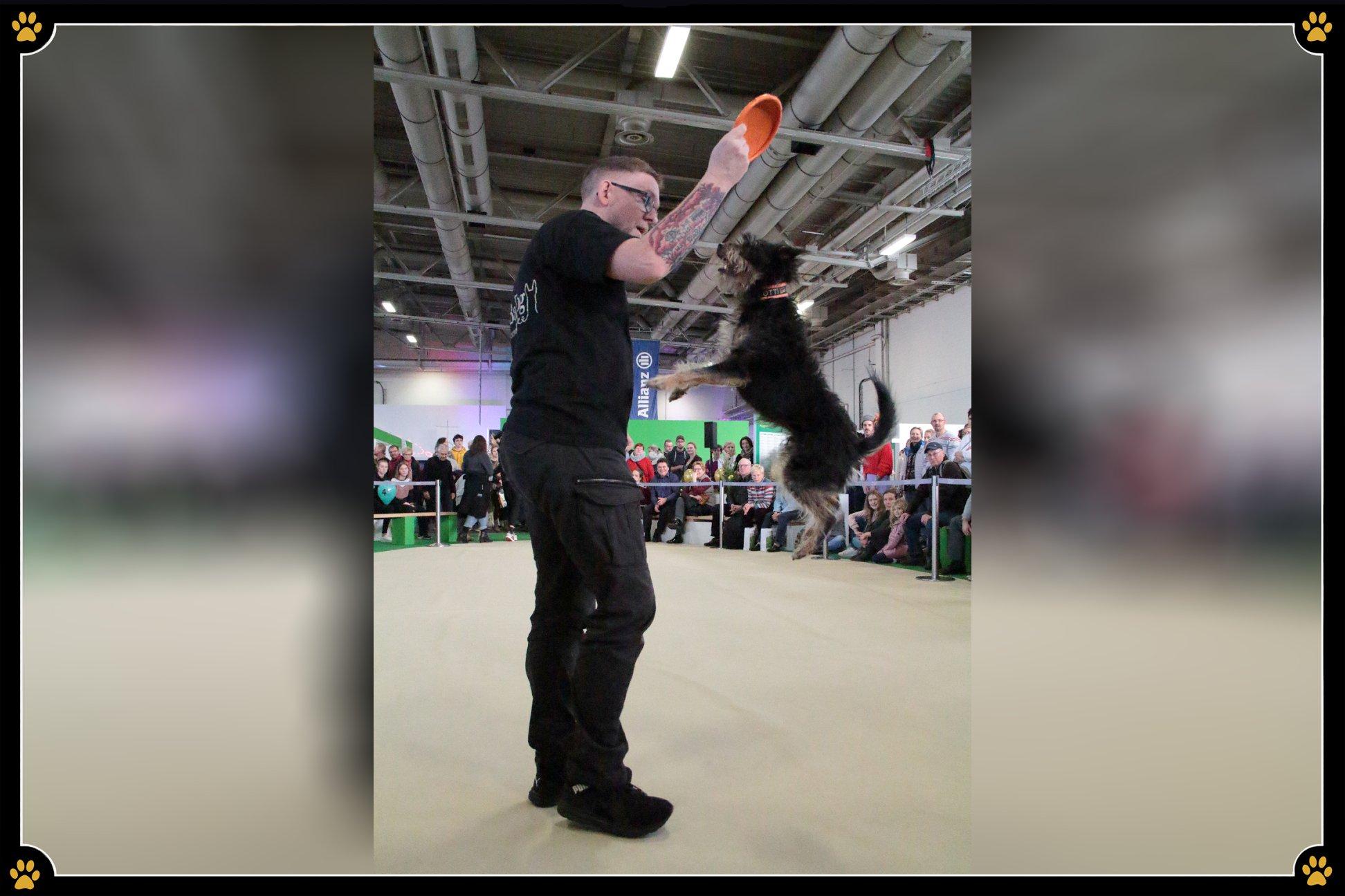 JoBaDog_Gruene_Woche_2019_Frisbee_2.jpg