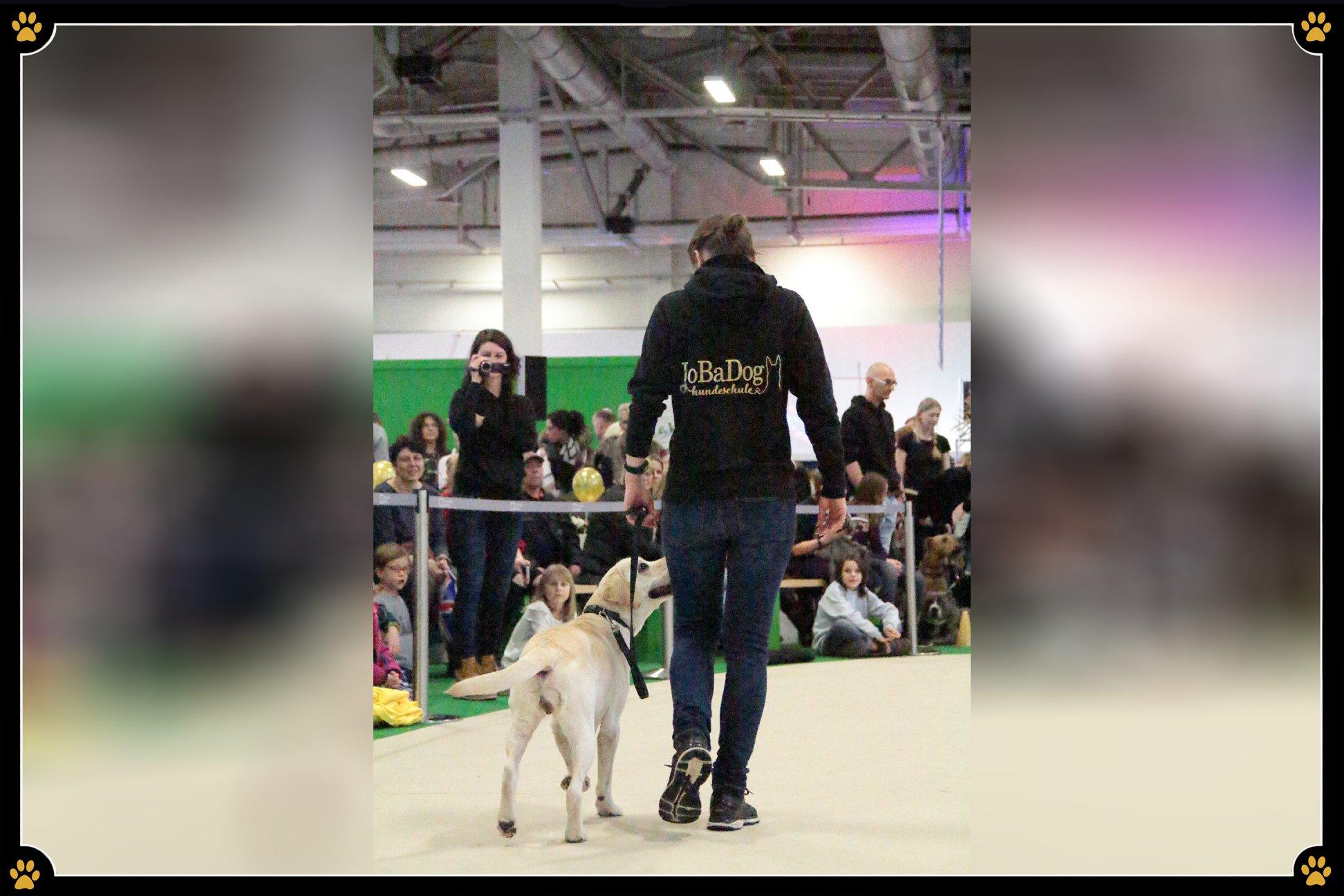 JoBaDog_Gruene_Woche_2019_Labrador.jpg
