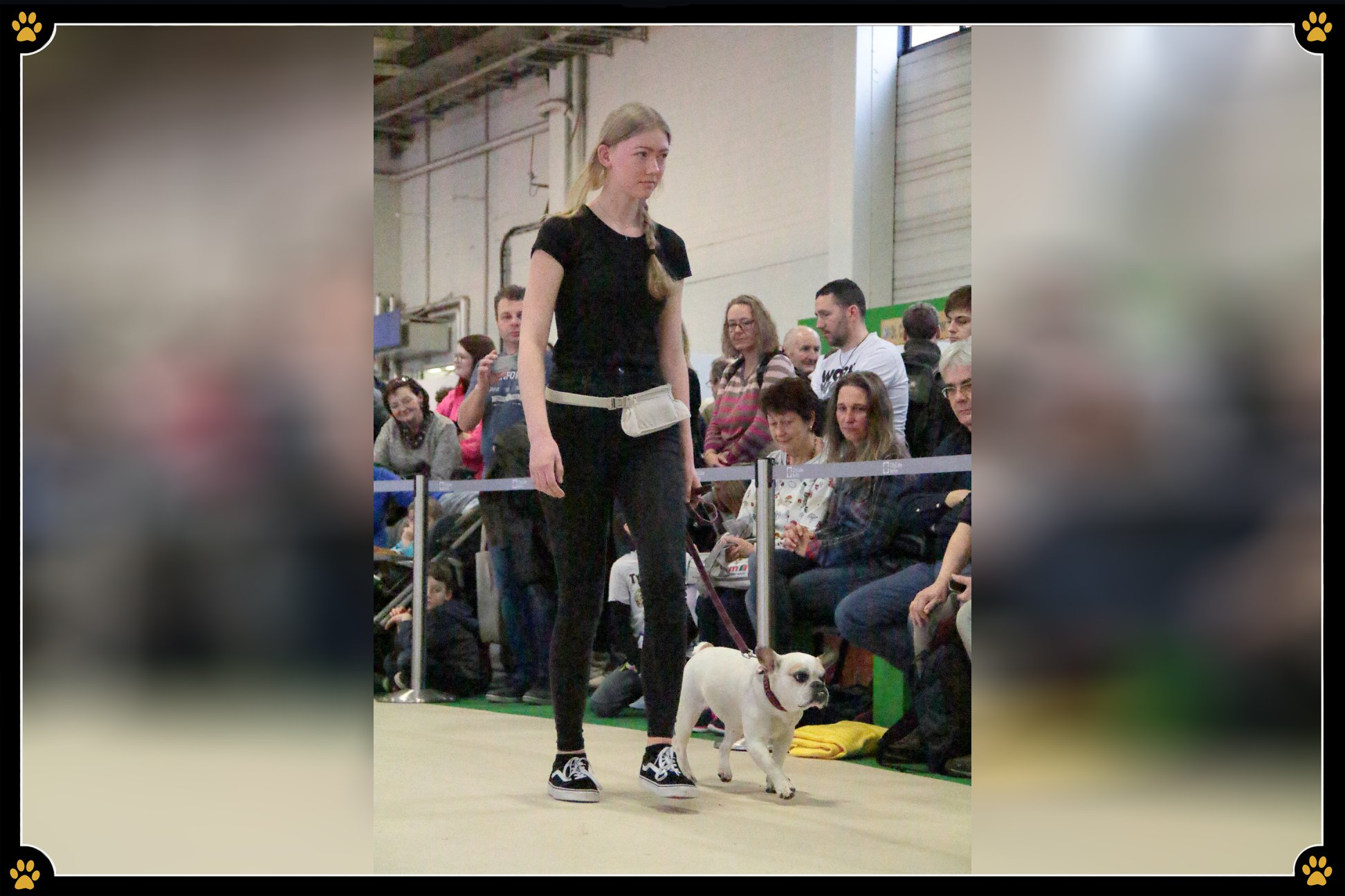 JoBaDog_Gruene_Woche_2019_Franzoesische_Bulldogge.jpg