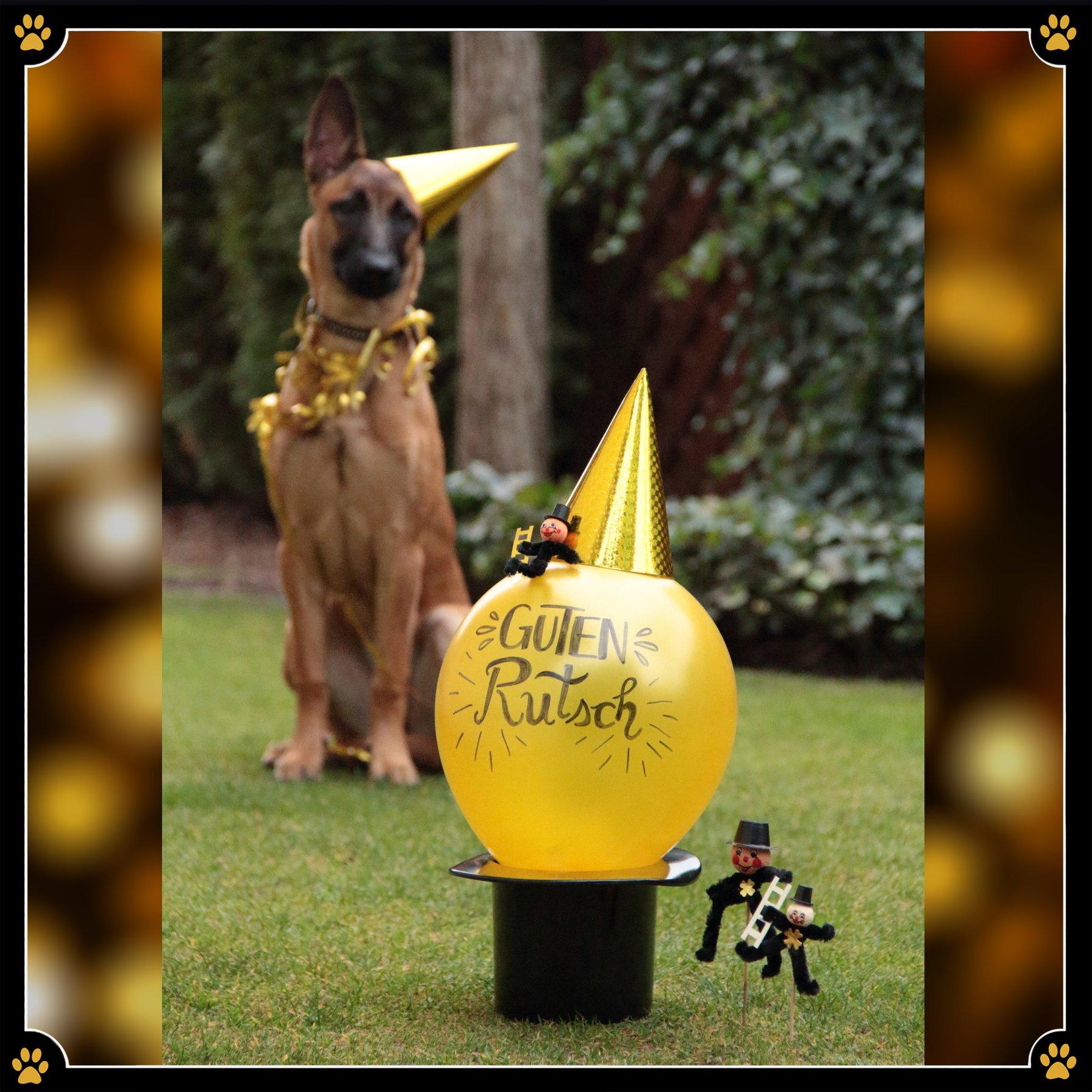 JoBaDog hilft bei den guten Vorsätzen… - Man kann es nicht leugnen – wir alle haben stets Potential uns zu verbessern. 💪Und eben das versuchen wir jedes Jahr aufs Neue. Wir wollen mehr Sport machen, mehr Zeit mit der Familie verbringen und Stress öfter vermeiden.Wieso aber widmen wir uns nicht einem ganz anderen, aber ziemlich offensichtlichen Bereich unseres Lebens und formulieren gute Trainingsvorsätze mit unserem Hund für das neue Jahr? 🐾Denn dadurch wird nicht nur die Bindung des Hund-Mensch-Teams verstärkt, sondern auch sportliche Betätigung, mehr Zeit an der frischen Luft oder gemeinsame Spaziergänge mit der Familie werden möglich – und das alles nimmt sogar den Stress aus unserem Alltag. 😜Für alle, die Unterstützung bei der Umsetzung der guten Trainingsvorsätze brauchen gibt es gute Neuigkeiten, denn ich bin seit dem 3. Januar wieder für auch da! 🎉JoBaDog wünscht ein frohes neues Jahr 🎊💛