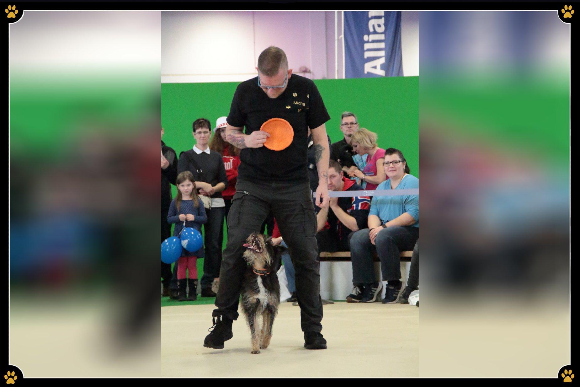 JoBaDog Dog-Frisbee auf der Grünen Woche - Haben Sie einen Hund, mit dem Sie noch so viel toben können, er aber trotzdem keine Ruhe gibt und voller Energie durch die Wohnung rennt? 🐕Dann wäre die Sportart Dog-Frisbee vielleicht etwas für Sie und Ihren Vierbeiner!In der Hundeshow von JoBaDog auf der Grünen Woche zeigte Michael Schulz mit seinem Terrier-Mischling Otti, welche Möglichkeiten diese aktive, kreative Sportart bietet und was ein kleines, vierbeiniges Powerpaket alles leisten kann.😎