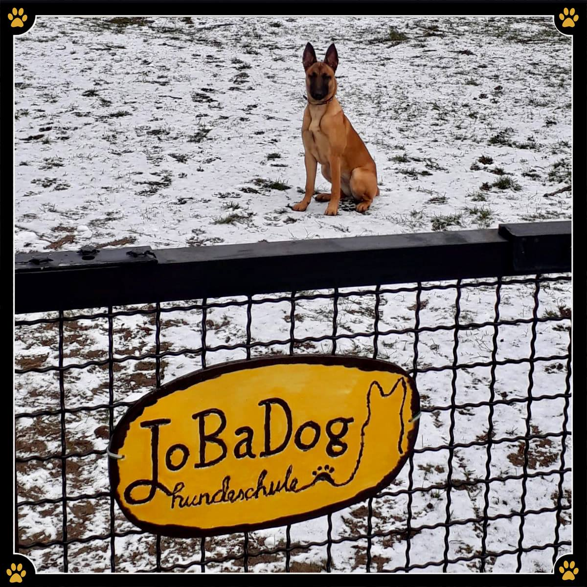 - Selbst entworfene Flyer, Werbeplakate und Banner der eigenen Hundeschule in der Hand zu halten ist etwas ganz besonderes.✨Noch besonderer ist es aber, wenn eigene Hundeschüler und liebe Menschen kleine handgemachte Überraschungen erschaffen, die dann einen speziellen Platz in der Hundeschule finden.💛Tausend Dank an Diana Gatzke für dieses wundervolle, selbstgemachte JoBaDog-Firmenschild! 🤩
