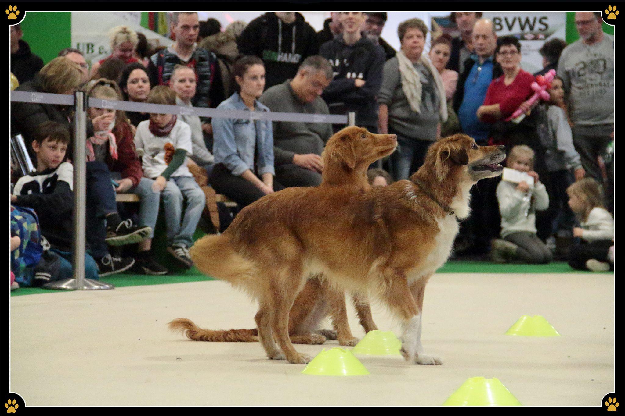 Jeder Hund hat seine Aufgabe - Jede Hunderasse wurde für eine bestimmte Aufgabe gezüchtet - so entstanden mit der Zeit Schutz-, Herden-, Jagd- und Hütehunde. 🐾JoBaDog zeigte auf der Grünen Woche, dass Vierbeiner wie der Border Collie auch ausgelastet werden können, wenn man keine Schafherde im Garten besitzt.🐑Auch muss man keinen Teich mit Enten haben, nur damit der Labrador mal müde ist.🦆Die Auslastungsprogramme von JoBaDog schaffen Abhilfe und ermöglichen es jedem Hund seine Bestimmung auf eine andere Art und Weise auszuleben.💛