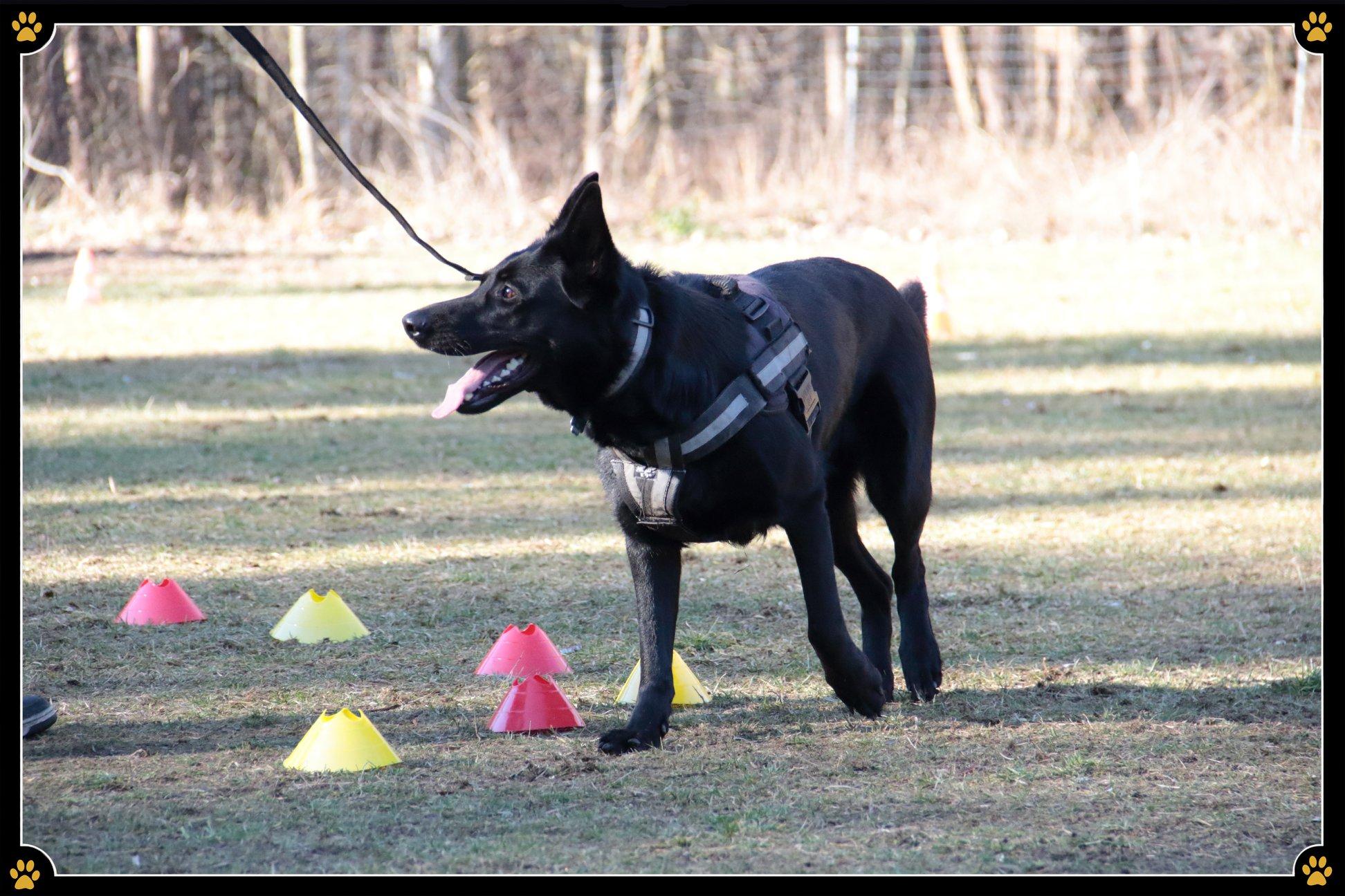 JoBaDog_Training_Körpersprache_2.jpg