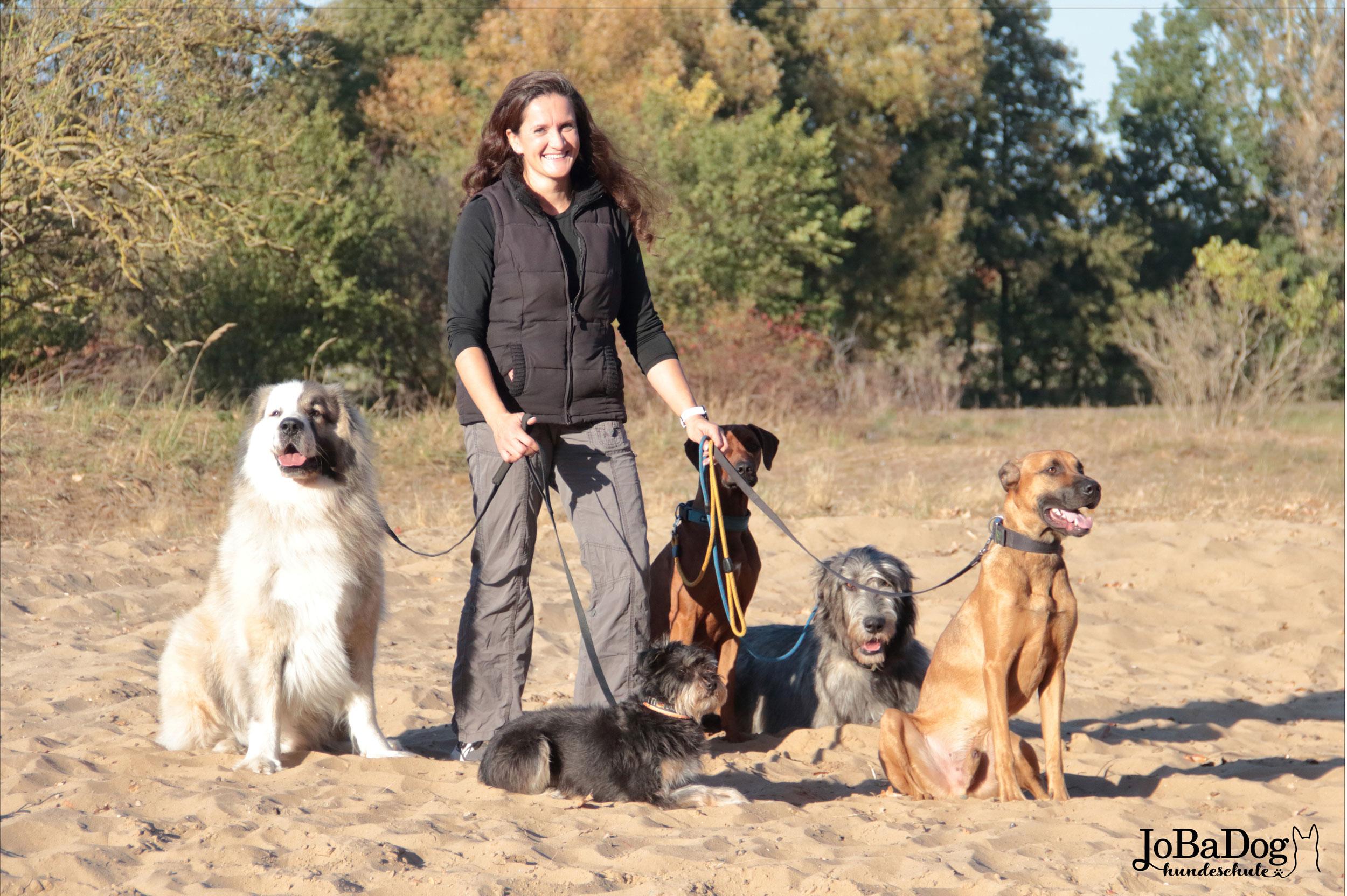 Effizientes Training bedeutet Hunde unter Berücksichtigung der Rasse auszubilden und nicht alle über einen Kamm zu scheren. -
