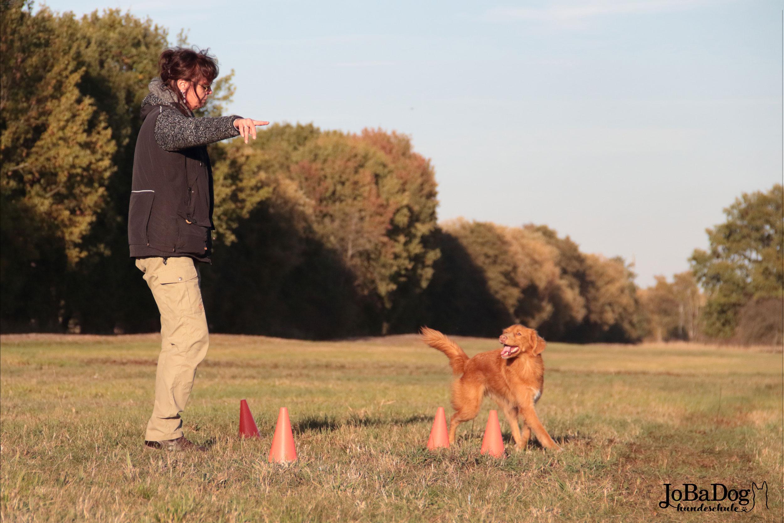 Nichts ist schlimmer als ein Hund ohne Aufgabe. Arbeitslosigkeit des Vierbeiners führt zu Aggression und Fehlverhalten. -