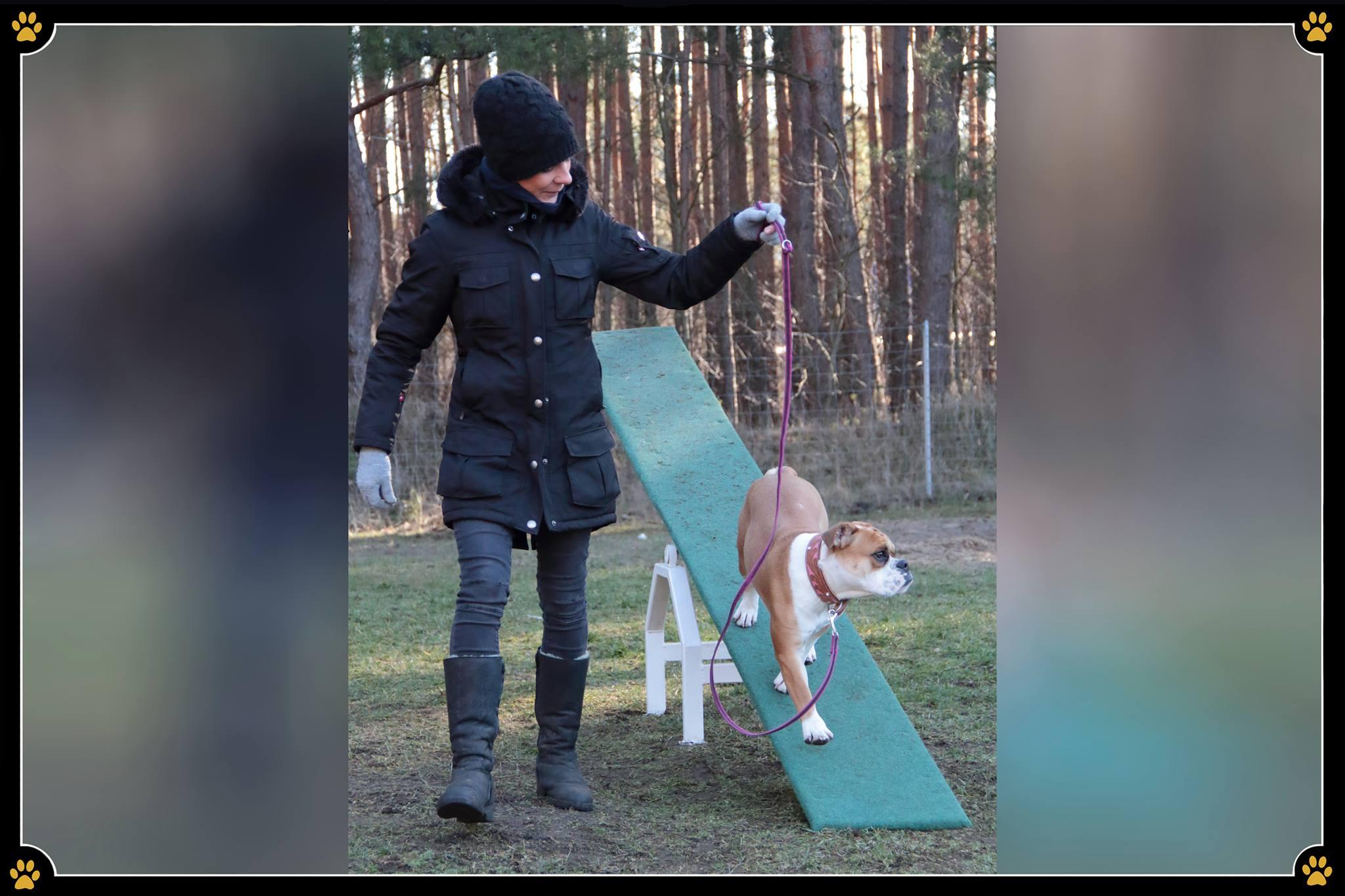 Die Auslastung des Hundes kann viele Gesichter haben - Auch Vertrauensarbeit, in welcher der Hund sich auf seinen Menschen verlässt, schafft neben der Beschäftigung auch Bindung.🐾 Je mehr man sich mit dem Hund beschäftigt, umso intensiver und stärker werden das Vertrauen und die Bindung. 💛Positiver Nebeneffekt: ausgelastete Hunde entwickeln weniger Unarten, wie Möbel benagen, ständiges Kläffen oder das Zerren an der Leine. Der Hund wird sich auf die Arbeit mit seinem Menschen freuen und sieht den Menschen als Teamleader an, der stets für Regeln und Ordnung, aber auch für jede Menge Spaß verantwortlich ist. 💪😄