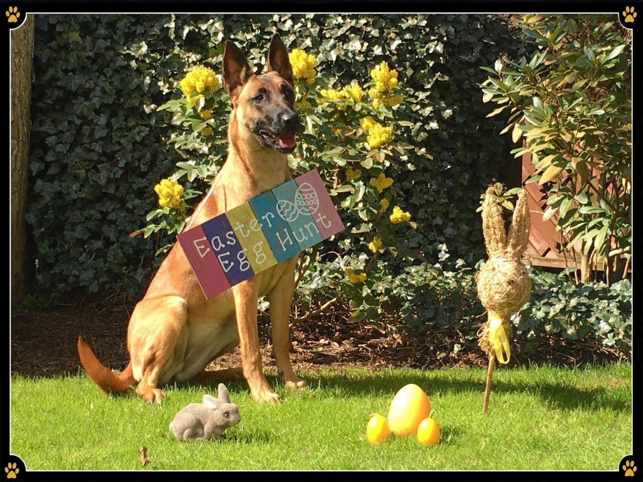 🐣🐰🐣 JoBaDog wünscht allen Hundeschülern und Freunden wunderschöne Ostern! 🥰 - Bei uns gingen die Uhren etwas schneller. 🕐 Denn der Osterhase hoppelte bereits am Karfreitag über den Platz🐇 und versteckte das ein oder andere Osterei. 😜🥚