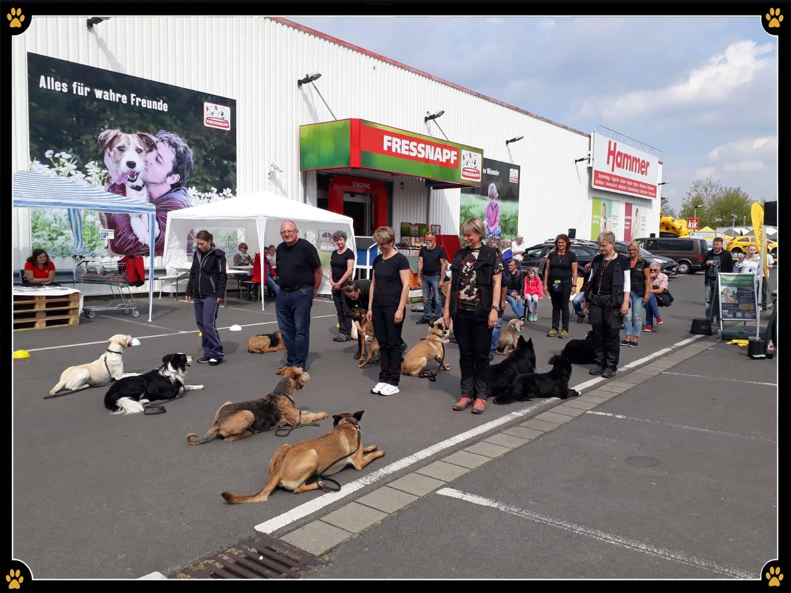 """JoBaDog auf dem Frühlingsfest von Fressnapf in Oranienburg - Heute präsentierte JoBaDog, auf dem Frühlingsfest von Fressnapf Deutschland Oranienburg, viele unterschiedliche Hunderassen und deren Fähigkeiten! 😄Die individuellen Hund-Mensch-Teams begeisterten das Publikum und sorgten für viele, faszinierte Interessenten. 💛Wer uns heute verpasst hat kann auch morgen beim JoBaDog Stand des Frühlingsfestes vorbeikommen. 🌸Um 13:30 Uhr und 15:30 Uhr präsentieren die Hundeschüler, neben dem Grundgehorsam im Gruppentraining, auch Aktivitäten wie """"Trick-Dog"""" und das """"Longieren"""". 🐕Seid gespannt und kommt vorbei! Ich freue mich auf Euch. 🥰"""