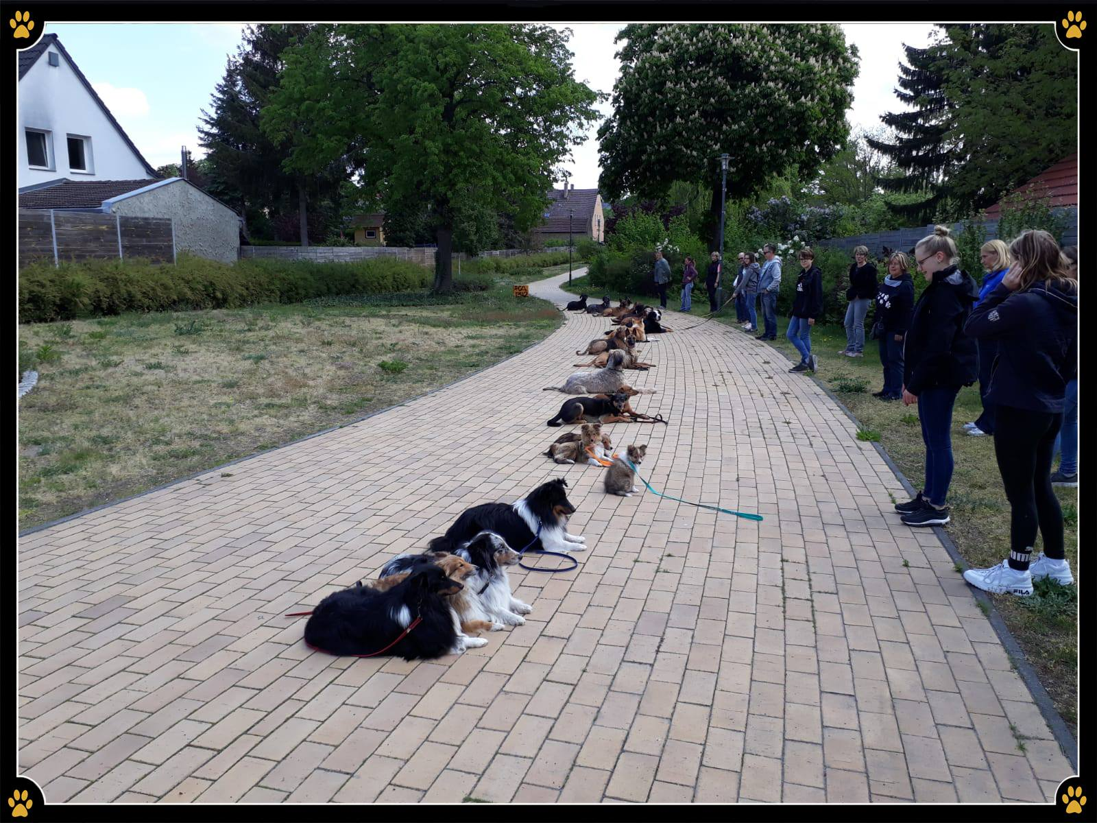 JoBaDog Alltagstraining in Velten -