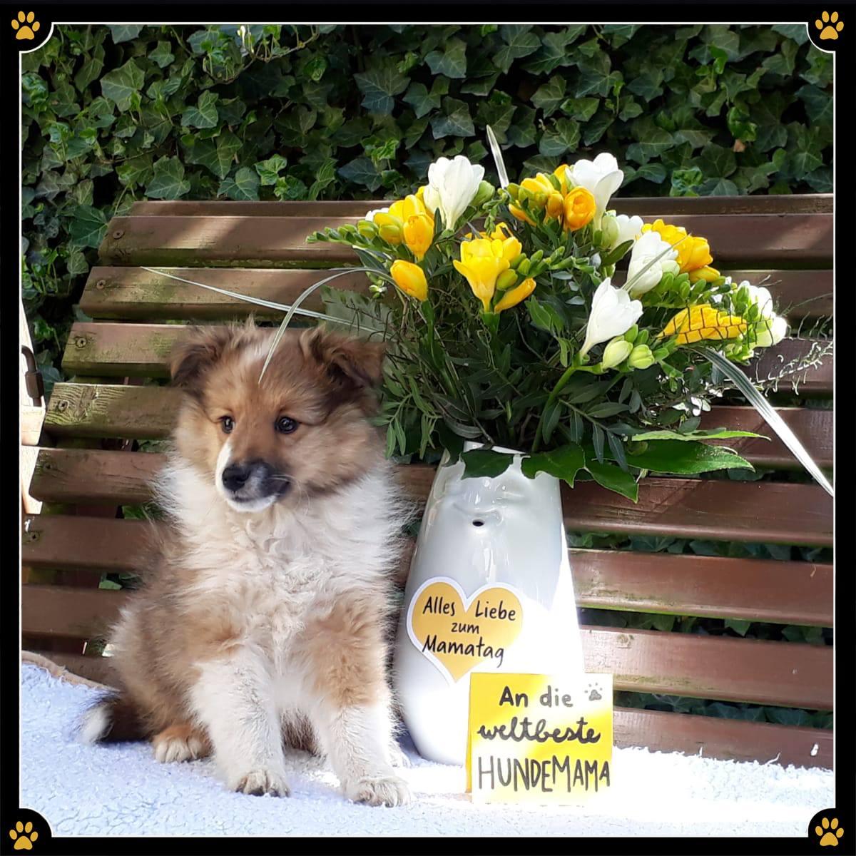 JoBaDog wünscht allen Hundebesitzerinnen einen wundervollen Hunde-Mamatag!💛 🐾 -