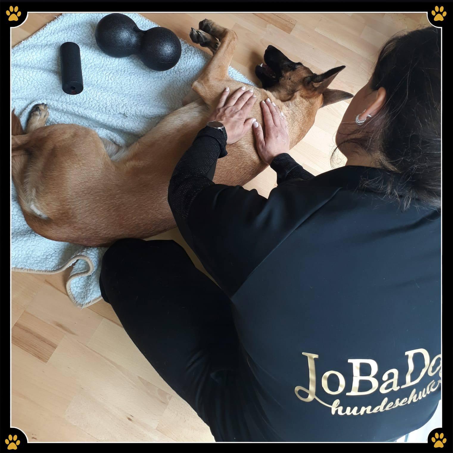 """JoBaDog """"Massage für den Hund"""" mit Sportdog Physio - Wolltet ihr schon immer mal wissen, welche gesundheitlichen Vorteile es hat, seinen Vierbeiner regelmäßig zu massieren und warum dabei gleichzeitig die Bindung des Hund-Mensch-Teams gestärkt wird? 💛Im Seminar von Sportdog Physio, werden alle Fragen Rund um das Thema """"Massage für den Hund"""