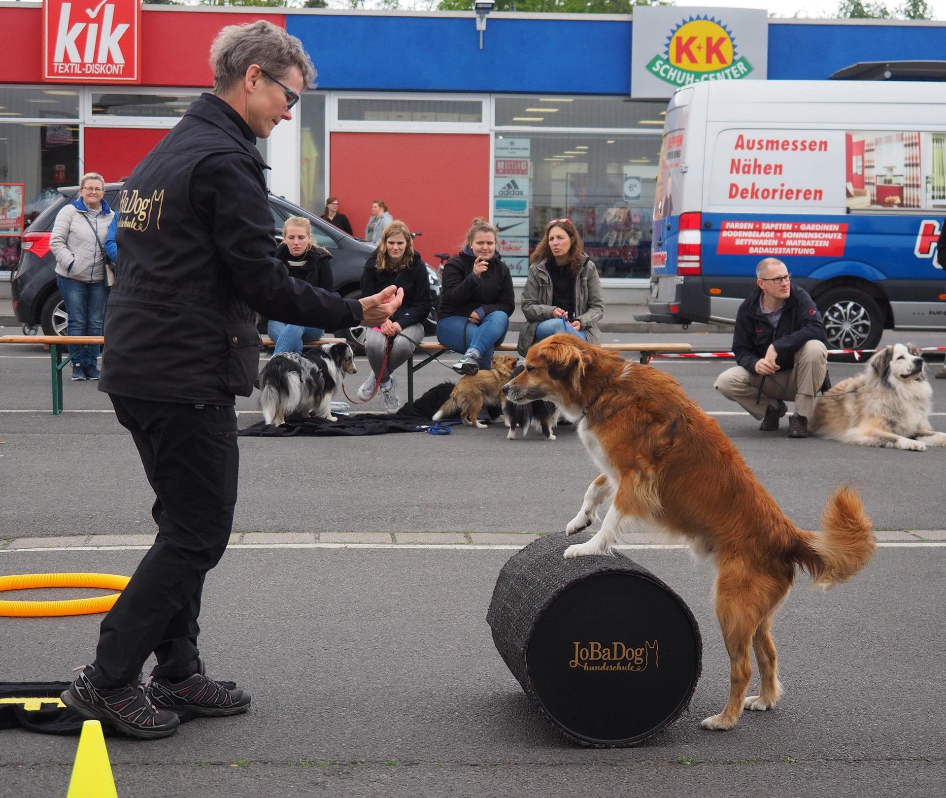 JoBaDog_Frühlingsfest_Fressnapf_Oranienburg_2019_14.jpg
