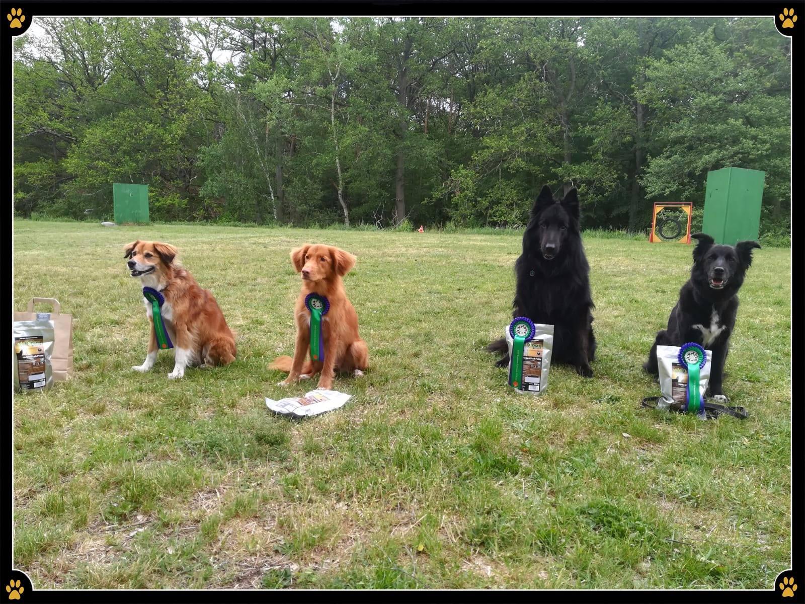 - Bei Rally Obedience handelt es sich um eine abwechslungsreichen Sportart in der Parcours und Obedience-Übungen kombiniert werden und die Zusammenarbeit als Team gefragt ist. 🐾💛Zwar steht der Spaß im Vordergrund, dennoch sind auch Präzision, Tempo und die perfekte Kommunikation zwischen Mensch und Hund von großer Bedeutung.🤩Am vergangenen Samstag, dem 25.05.2019, fand der 1.Spargel Cup im Hundesportverein Kremmen/Schwante 1979 e. V. statt. Auch 3 unserer Hundeschüler starteten mit ihren Hunden auf diesem Rally Obedience Turnier. 🐕Sie erzielten unter der fachmännischen Bewertung von Richterin Astrid Heilig hervorragende Ergebnisse!💪🏻Wir gratulieren: Bärbel mit ihrem Fido zu einem