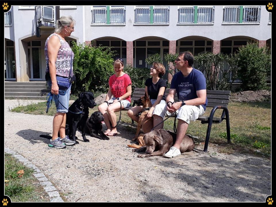 JoBaDog_Alltagstraining_20_Juli_2019_Leegebruch_6.jpg