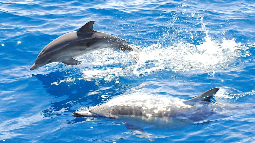 Dolphin-watching-exciting.jpg