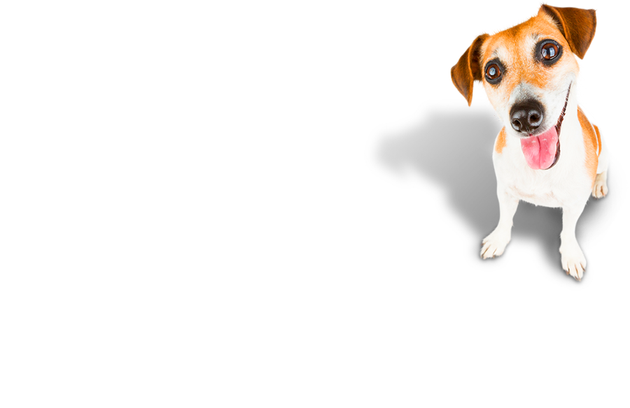 Love life with a happy dog – Christchurch & Bournemouth Dog Trainer