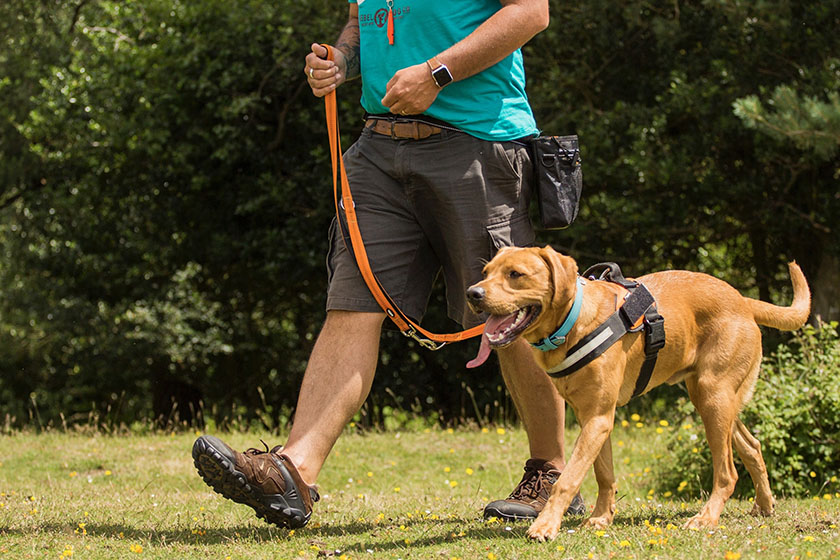 A dog walking on a loose lead. Look for a soft-loop in the lead with absolutely no tension.
