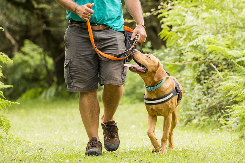 Your dog should look to you often, when they're on a lead or when they are running off-lead.