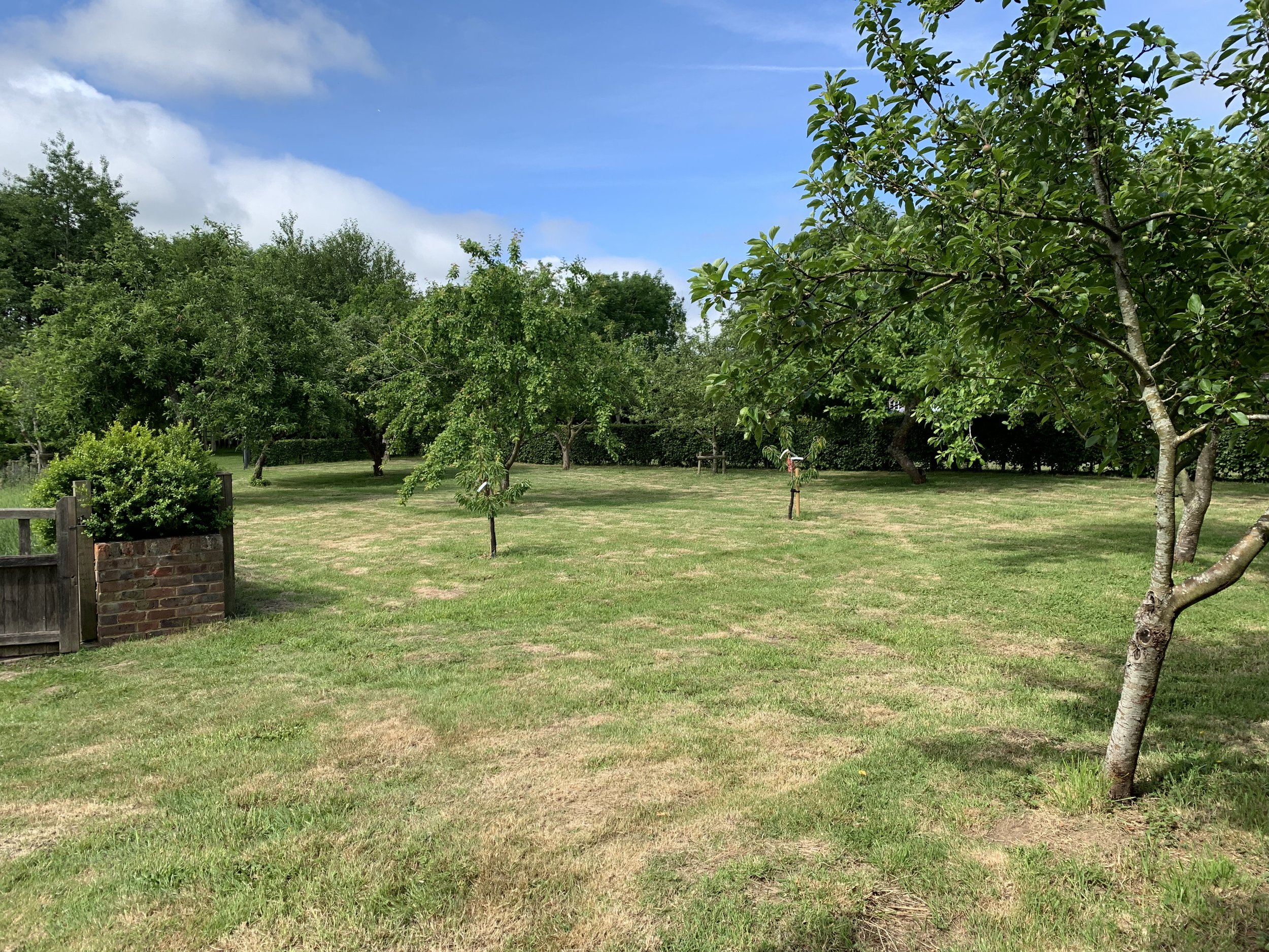 This is the orchard at the end of May, plums and Apples are just starting to grow. In view are the two cherry trees we planted earlier in the year.