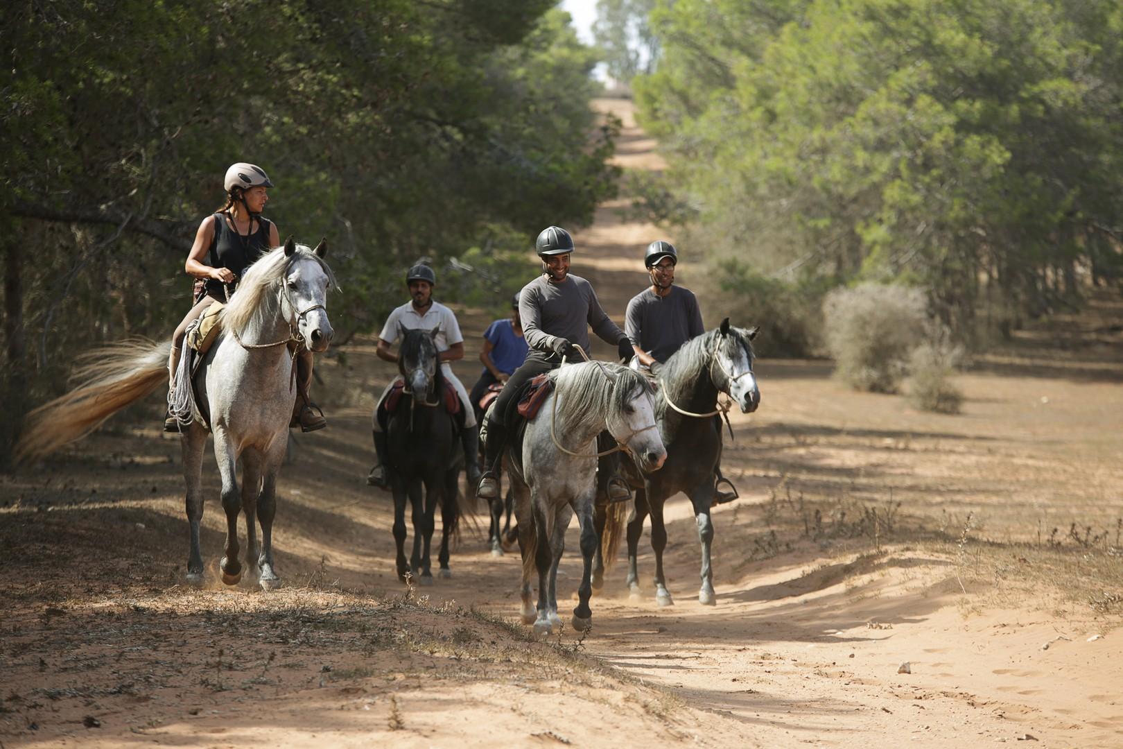 french-horse-riding-holidays.jpg