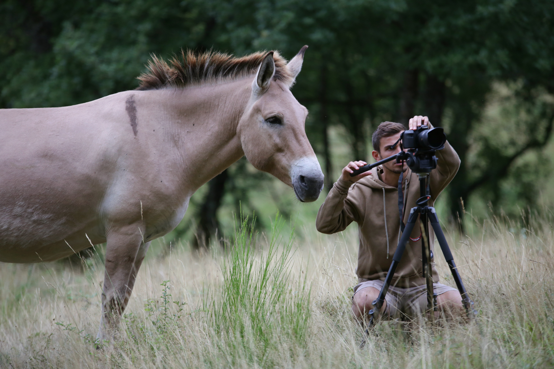 horse-photography-jeremy.jpg