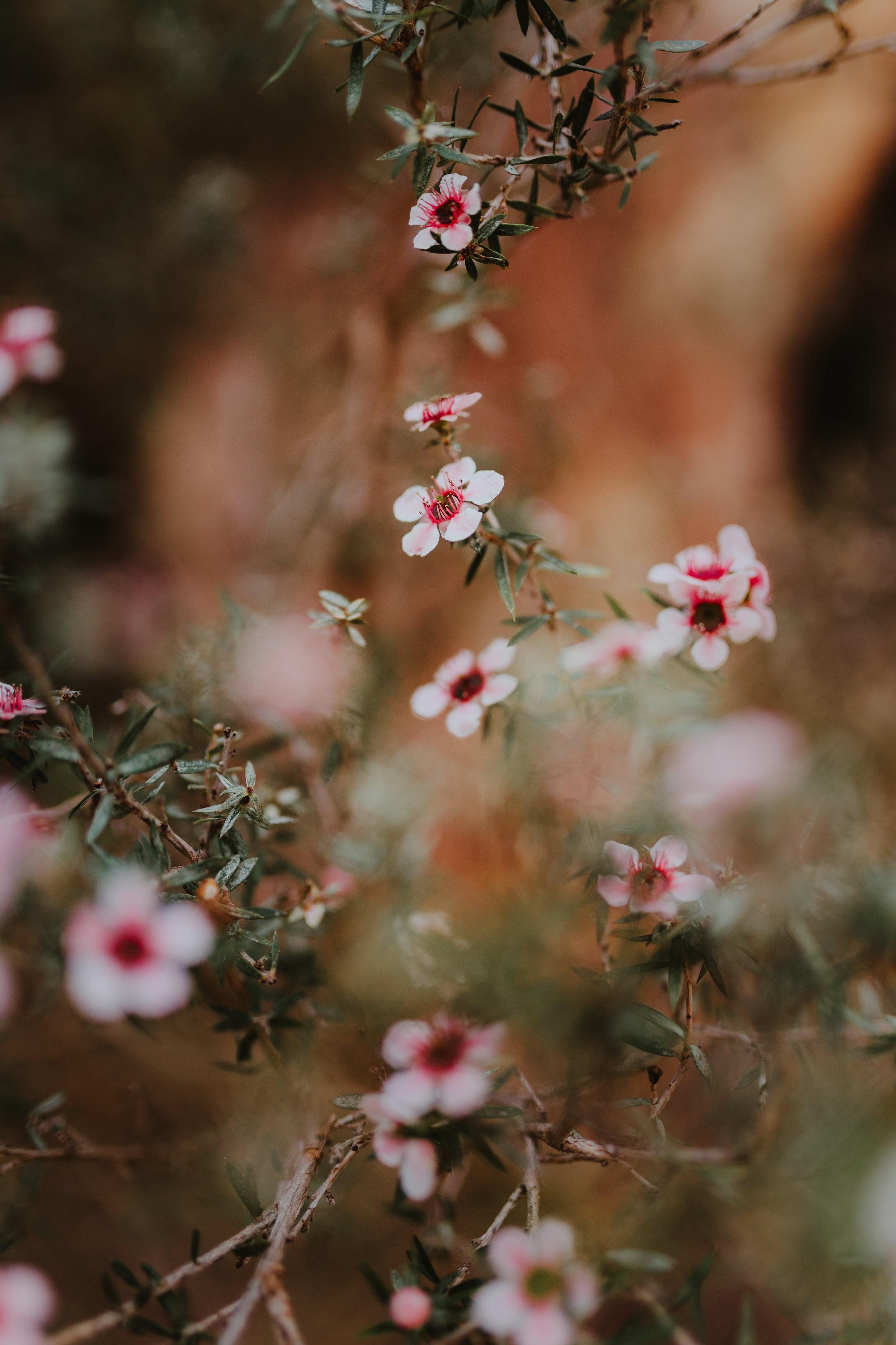 Josey Grace Photography-120.jpg