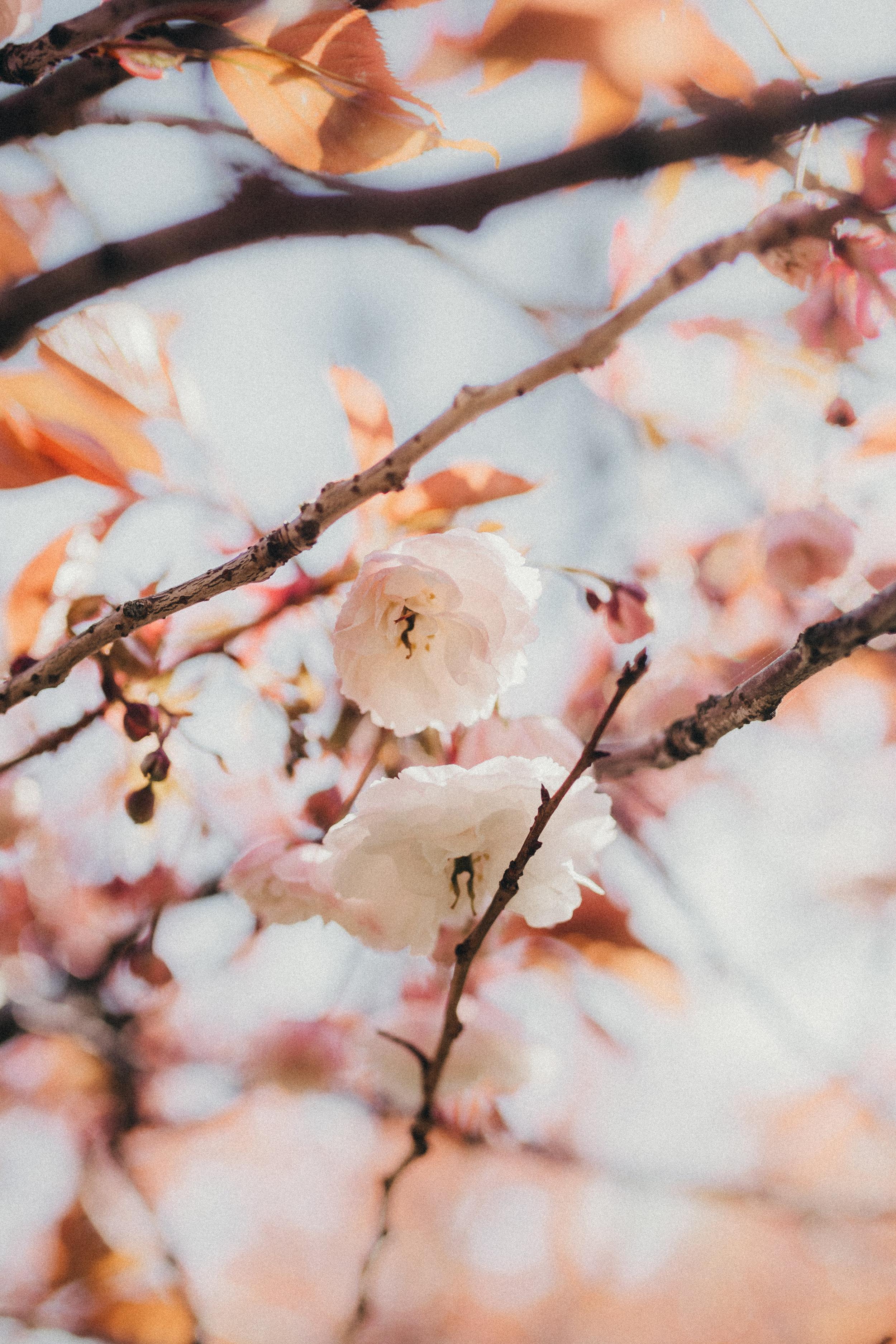 Josey Grace Photography-114.jpg