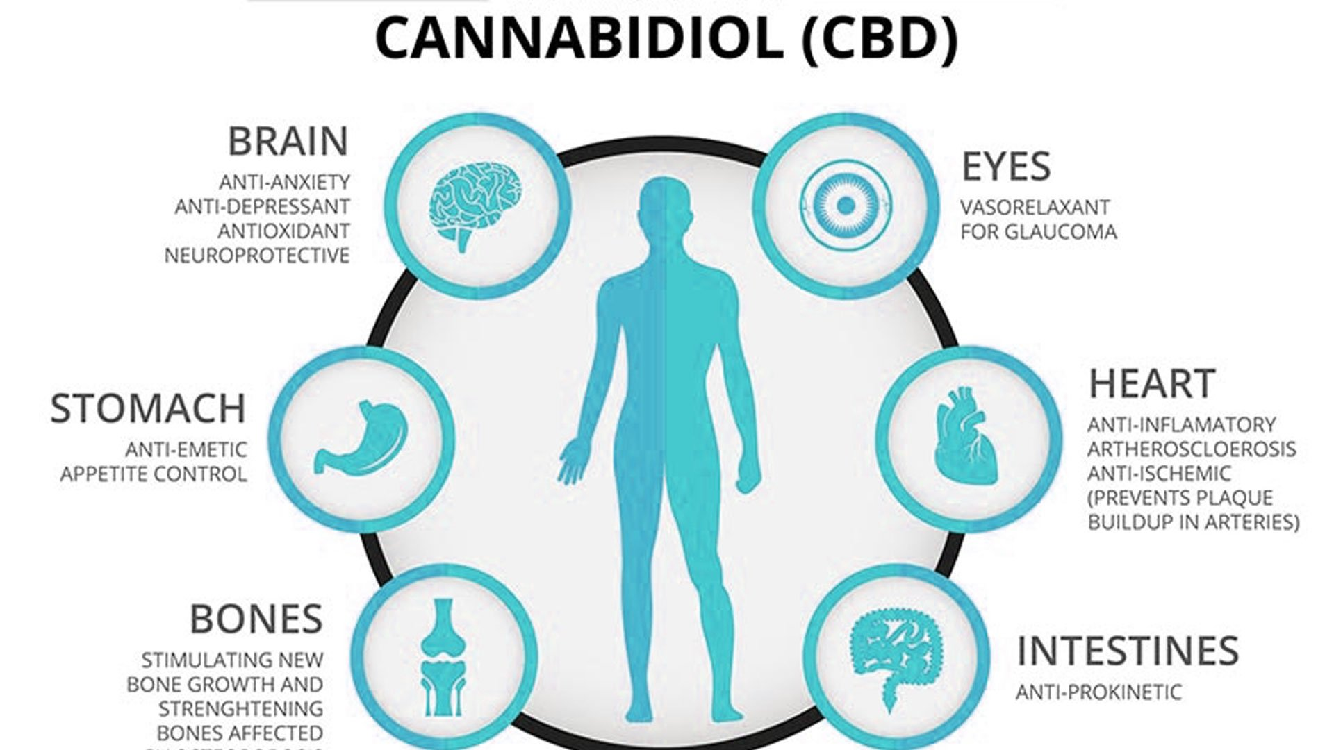 health-benefits-of-cannabidiol-_blog_aa639755-e23f-4f33-9cc2-601ab1dd3144_2000x.jpg