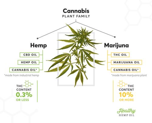 hemp-marijuana-difference.png
