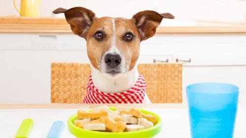 Dog at Table_teaser.jpg