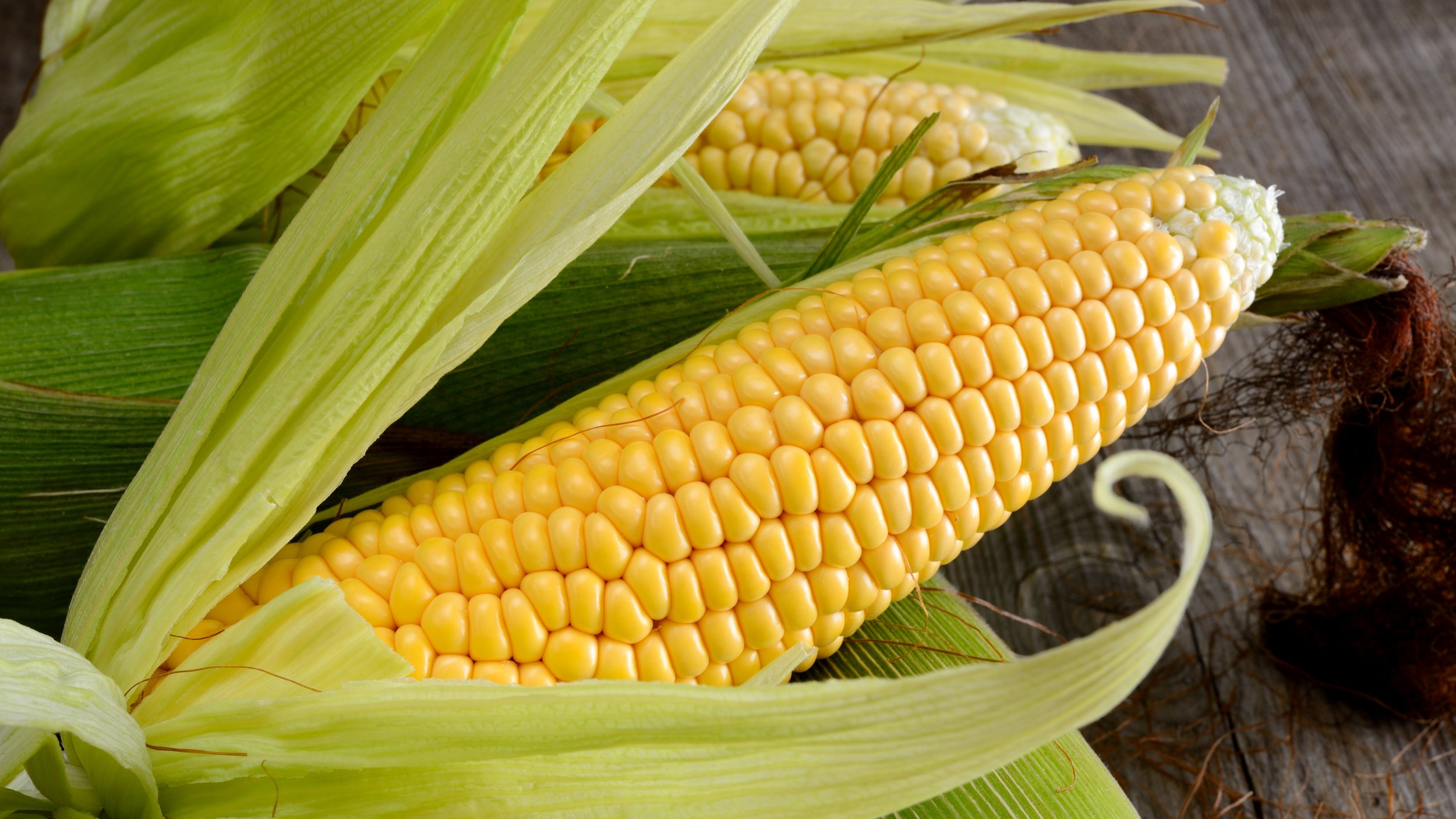 corn-cob-PM729H8.jpg