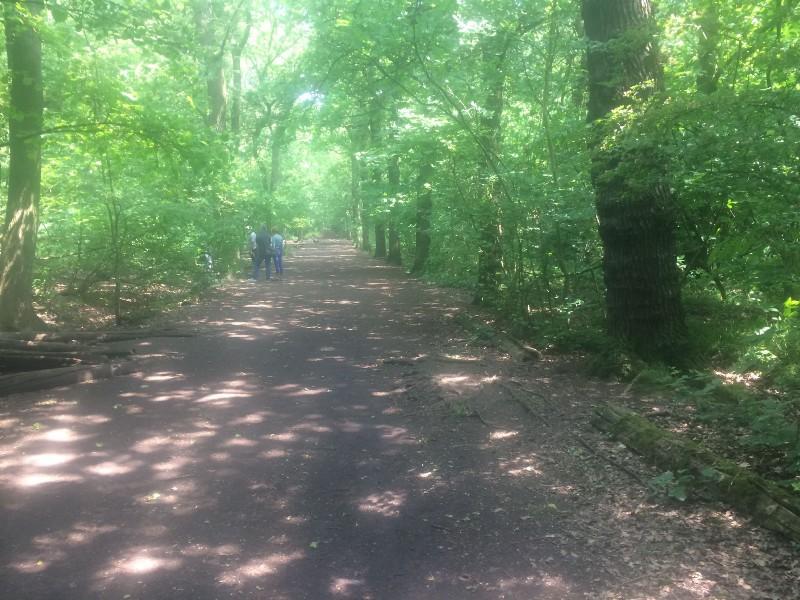 Lower Oxleas Wood