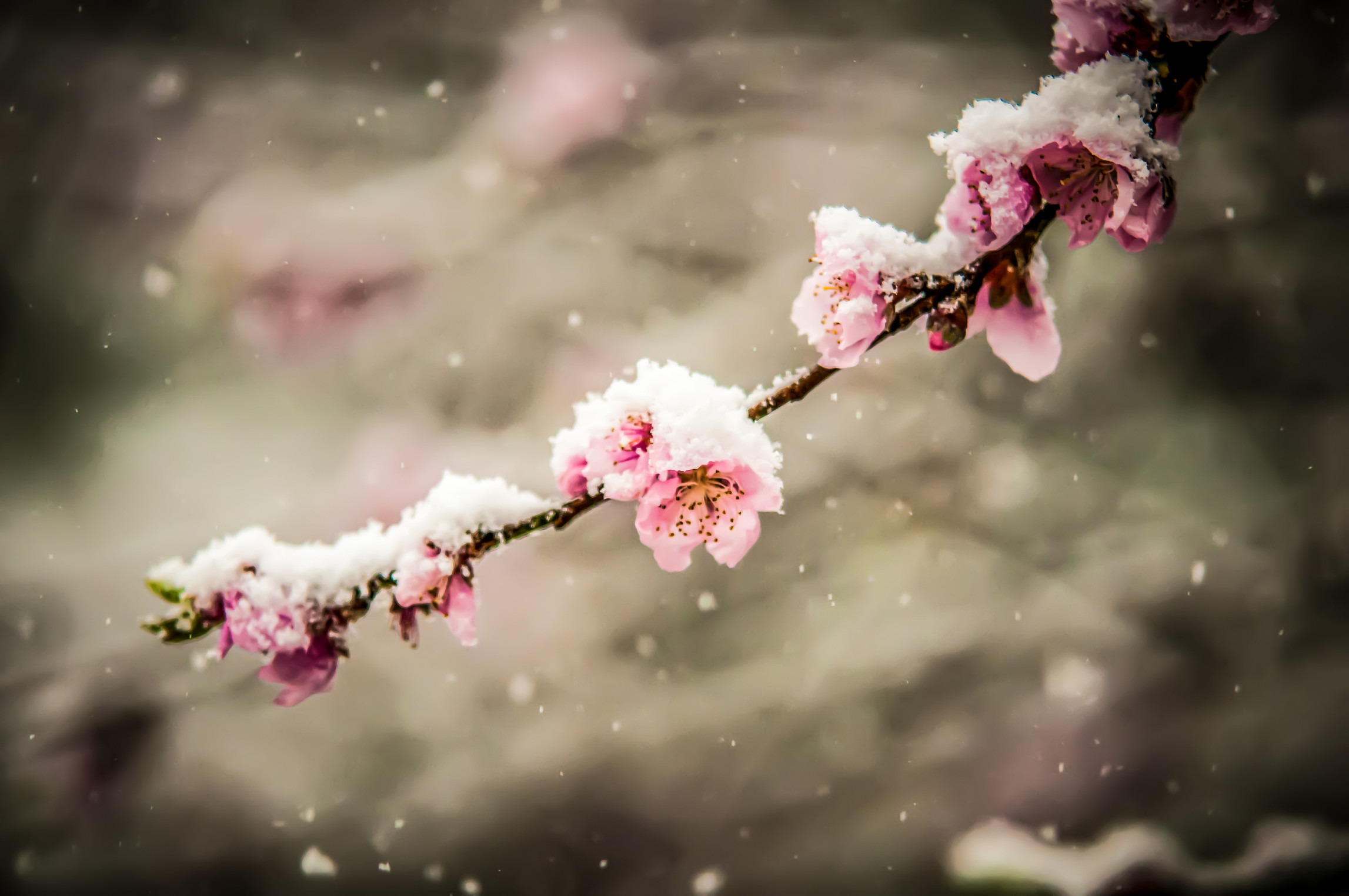 Spring early_k12942128.jpg